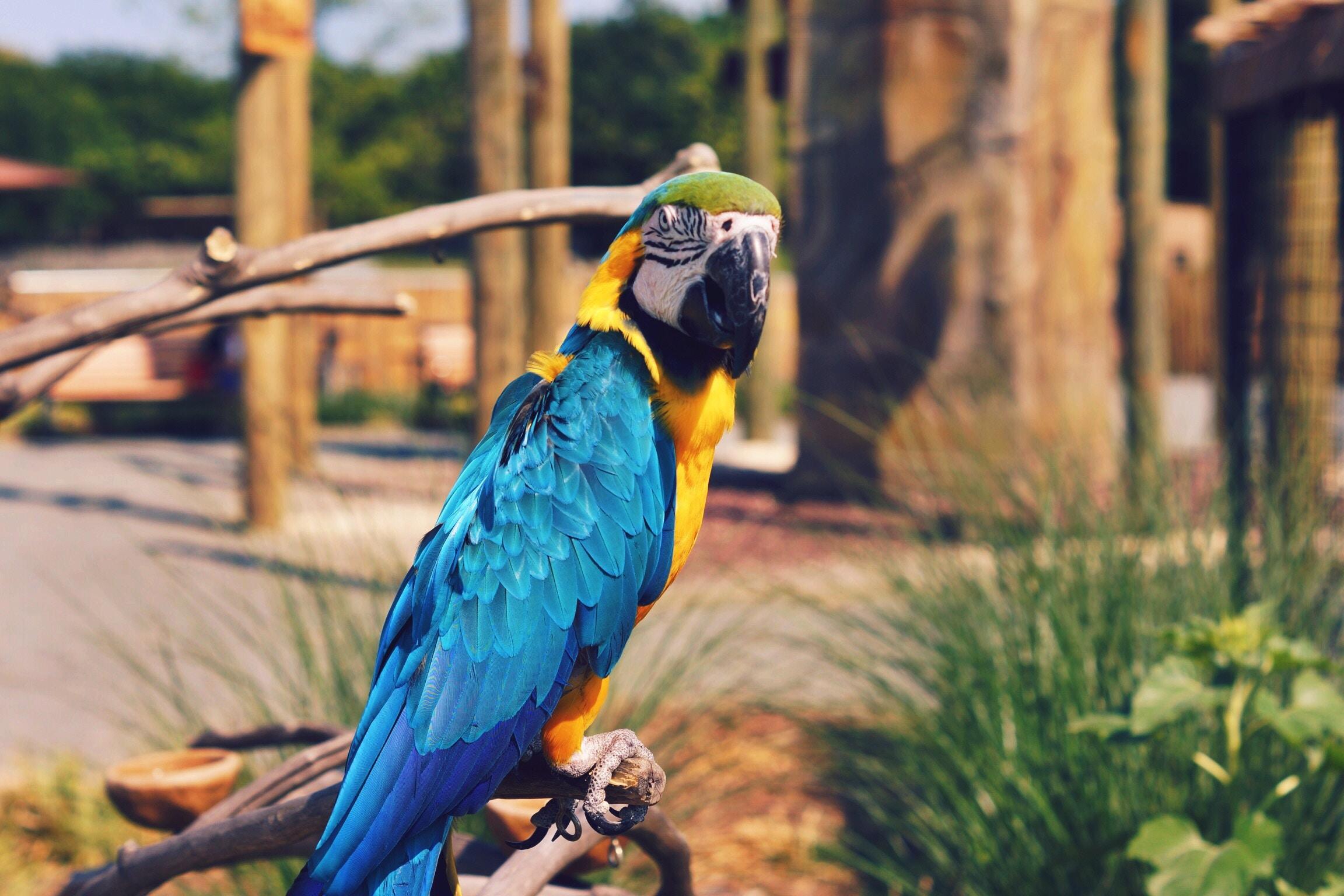 Картинки ара попугайчики
