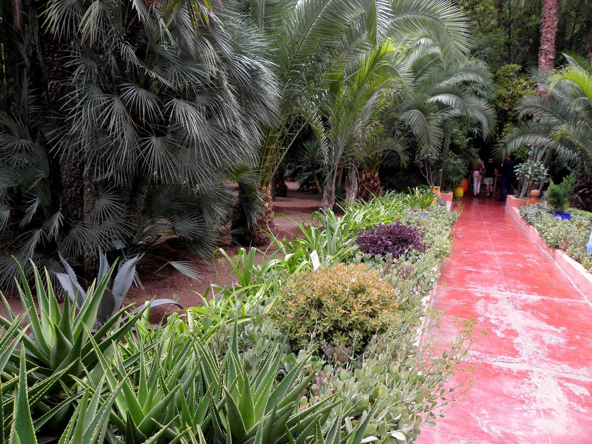 Aloe In Giardino sfondi : sentiero, giardino, alberi, aloe 1920x1440 - wallup