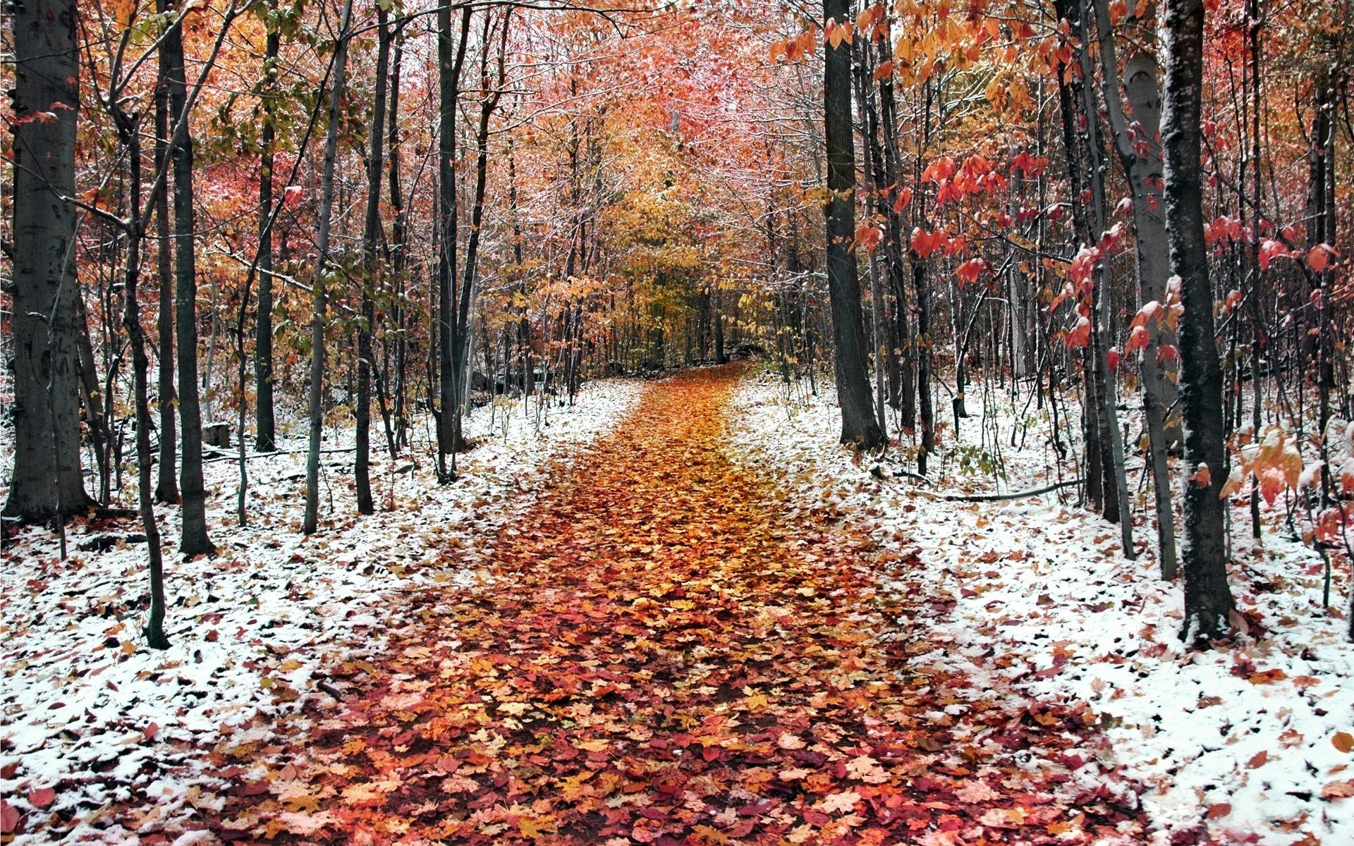 Картинки осень золотая и зима