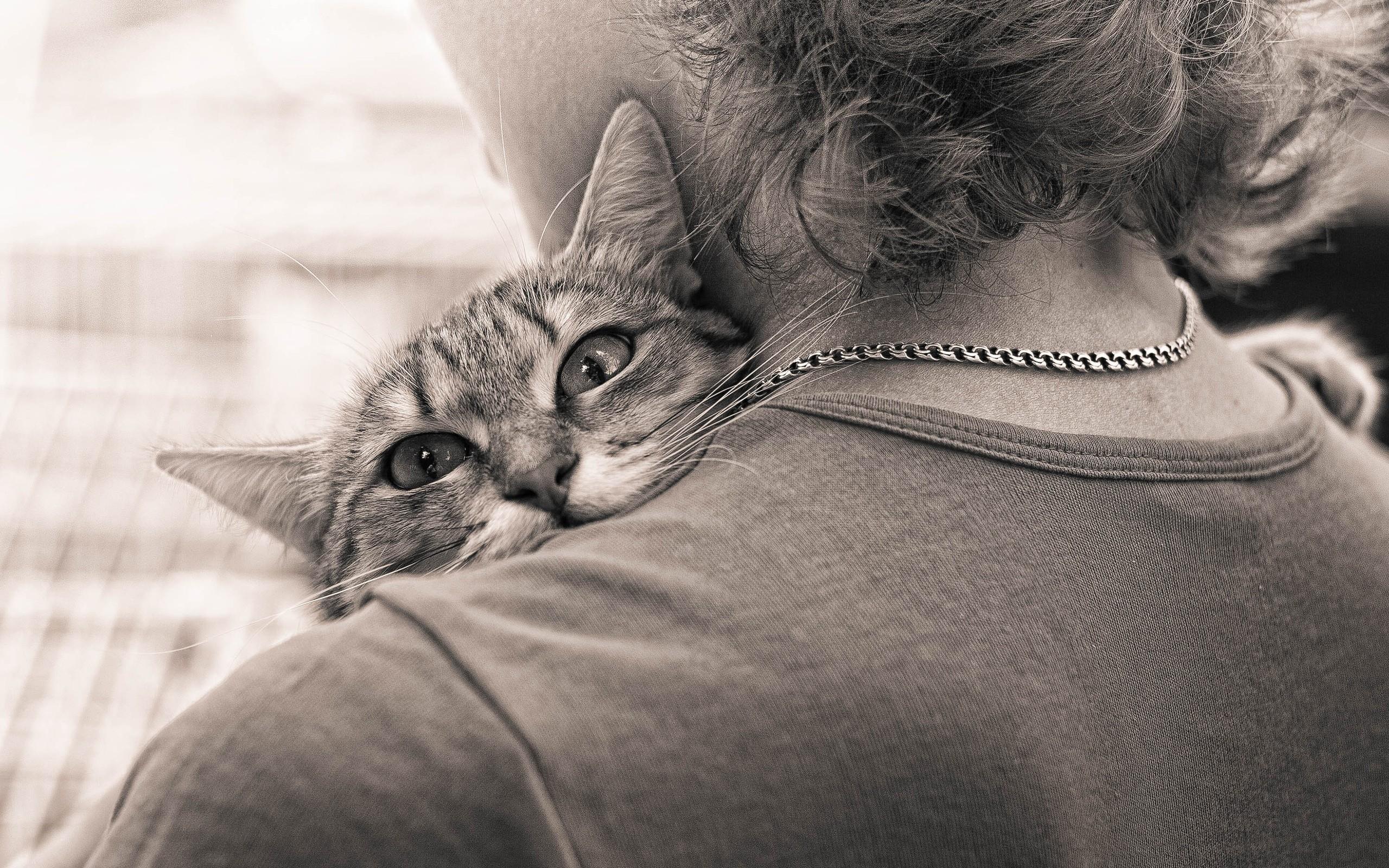 обнимать кота картинка рлс россии включают