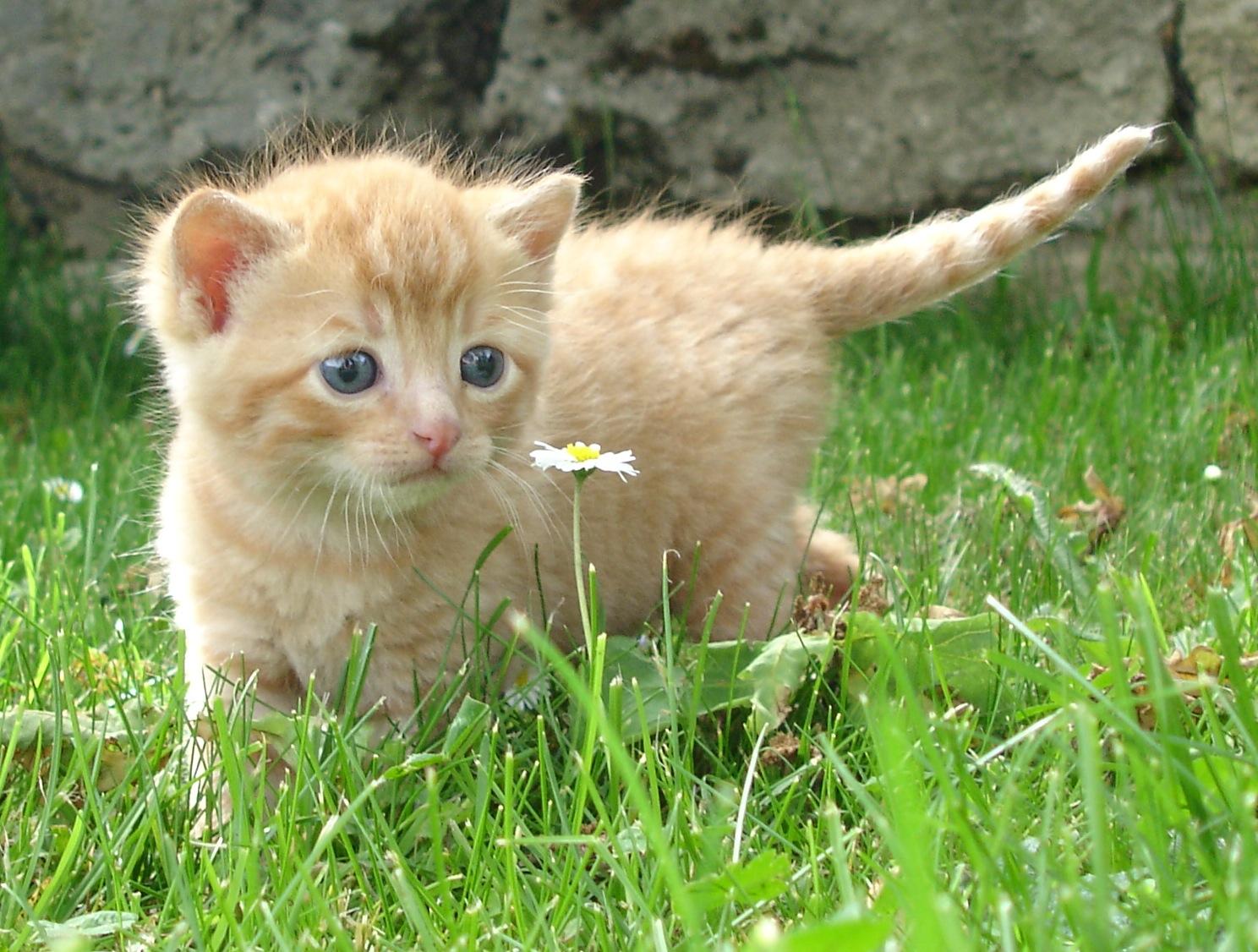картинка домашнего животного кошка гарантируем