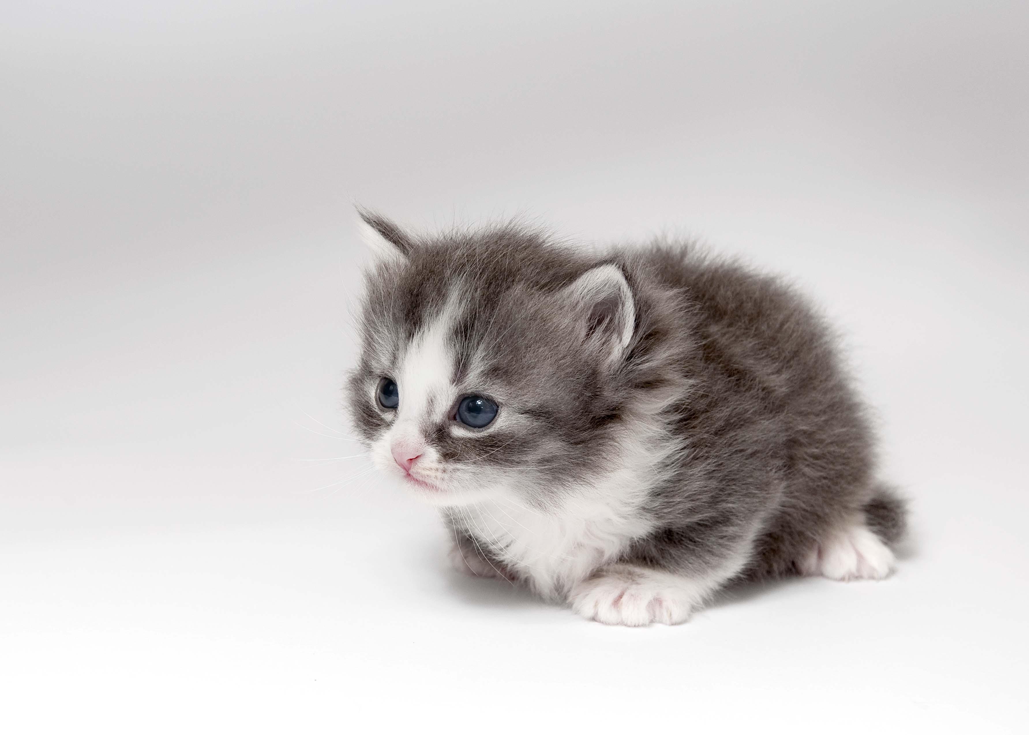 carino micio foto