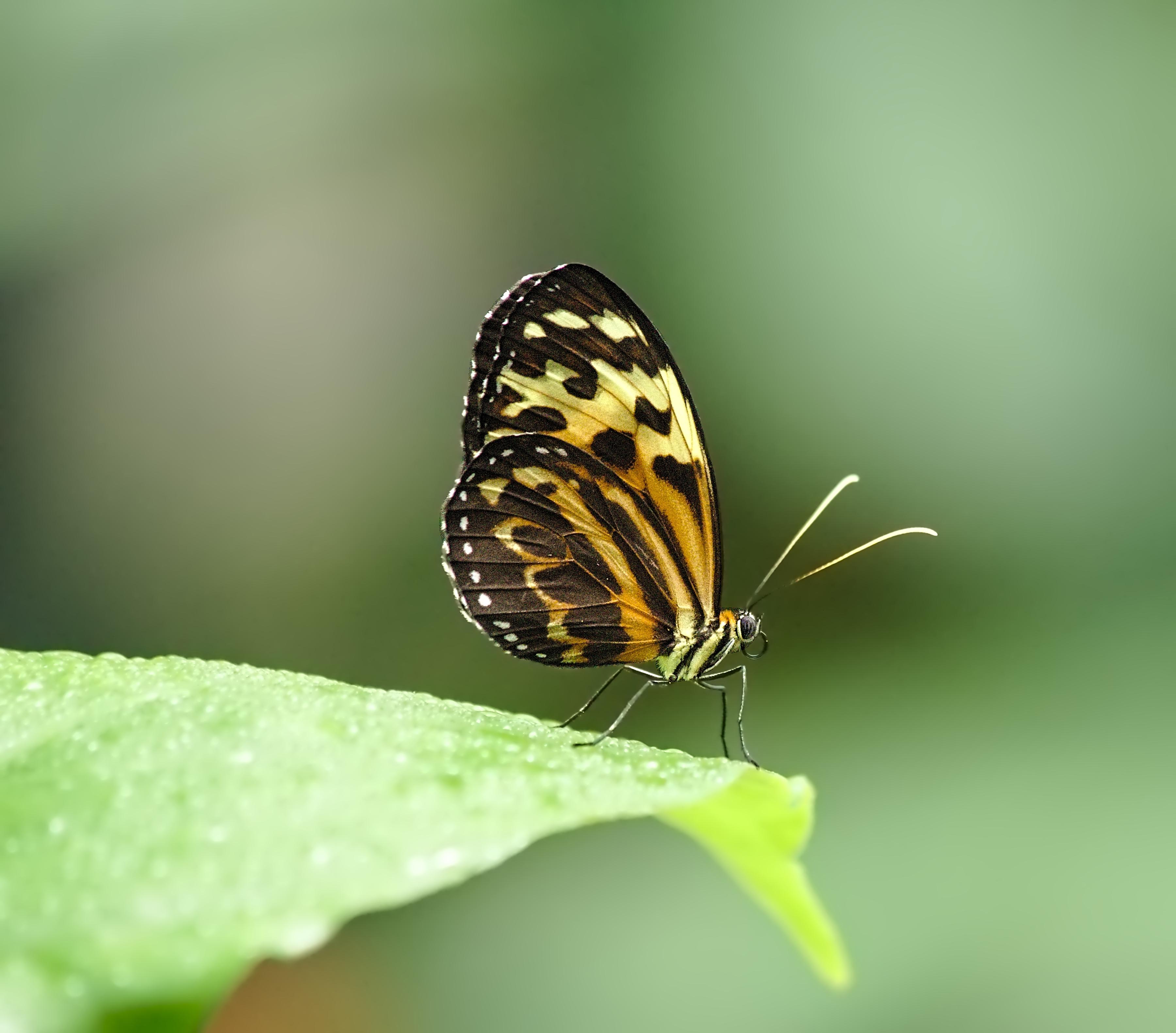 Fond d 39 cran la photographie insecte vert en volant faune orange mec bokeh punaise - Insecte vert volant ...