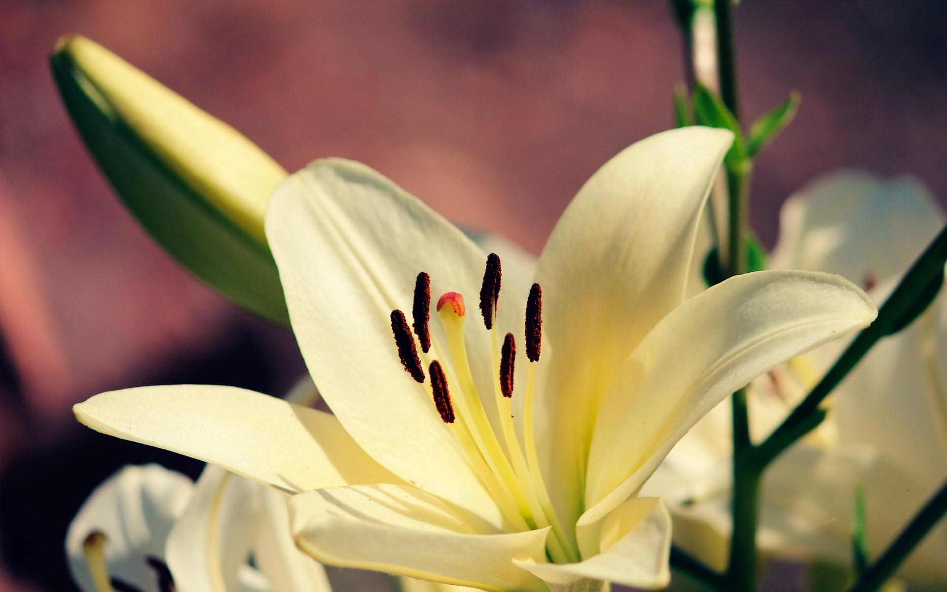 или сбор цветы лилии картинки для рабочего стола методики являются дополнительными