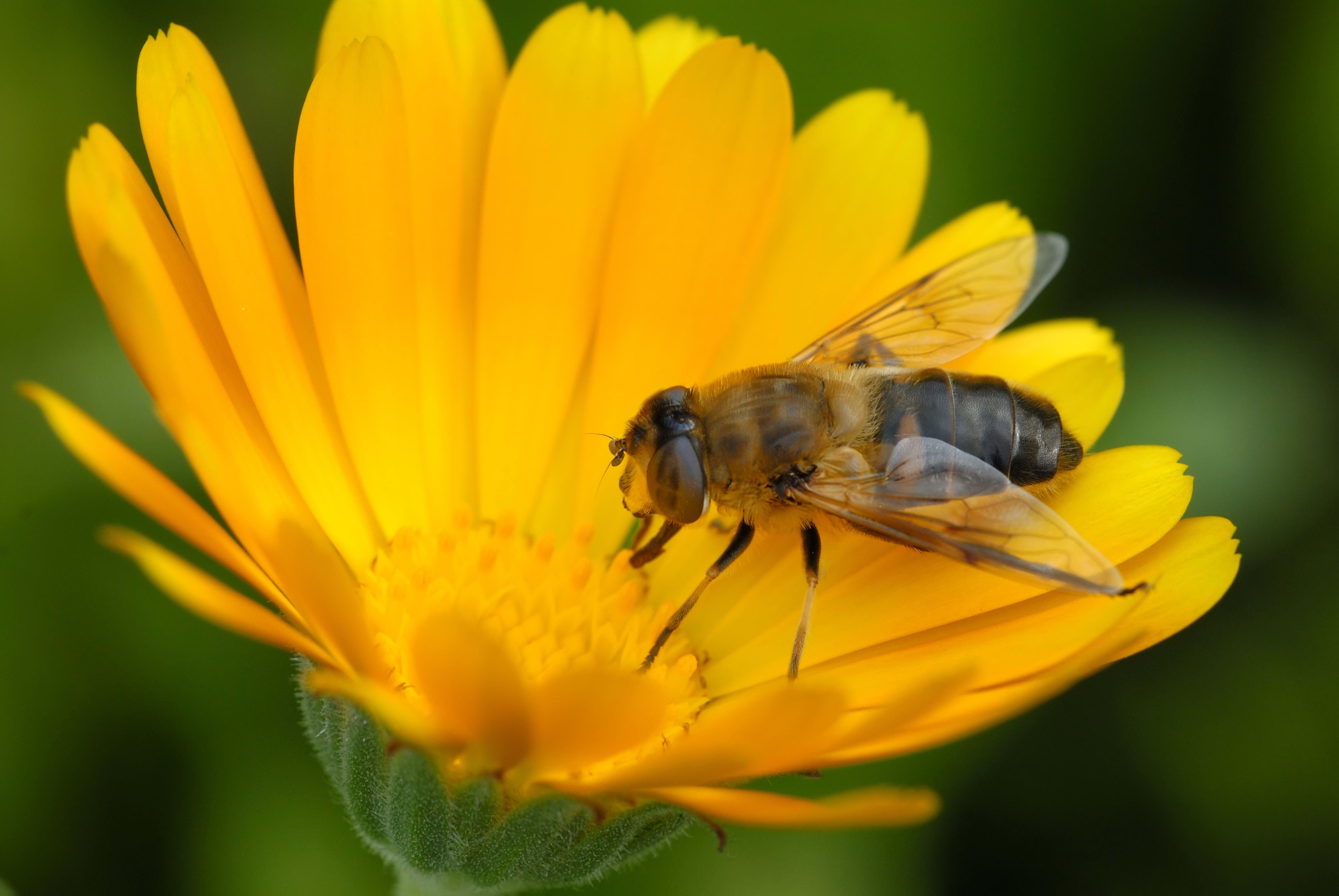 домов картинки пчела на цветочке людей именем