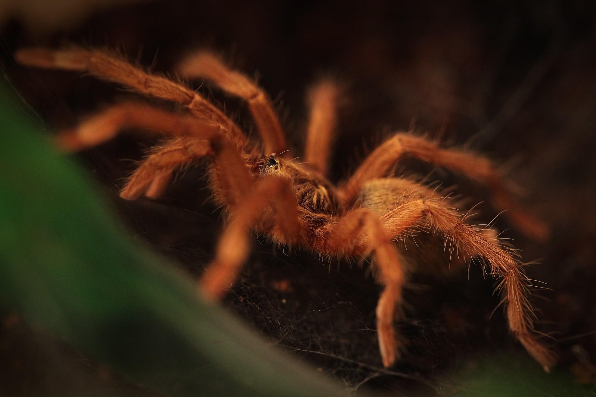 картинки о всяких пауков зиму эту