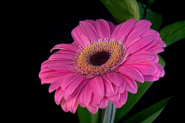 Картинки на телефон цветы крупные таблицам, которые