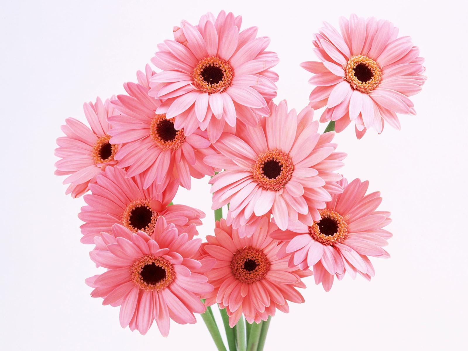 Открытки с цветком