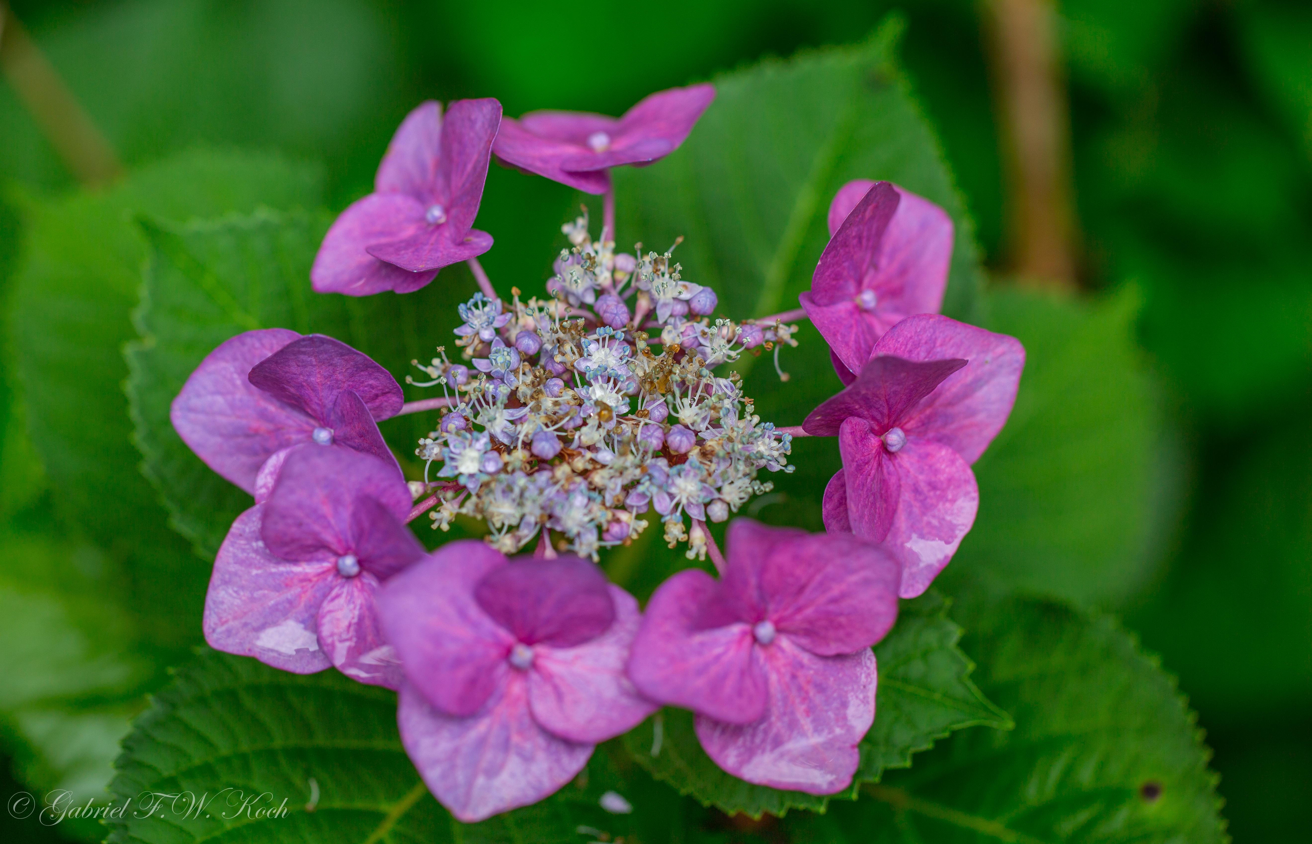 Hintergrundbilder : Rosa, Blumen, blau, rot, Orange, Pflanzen, Sonne ...