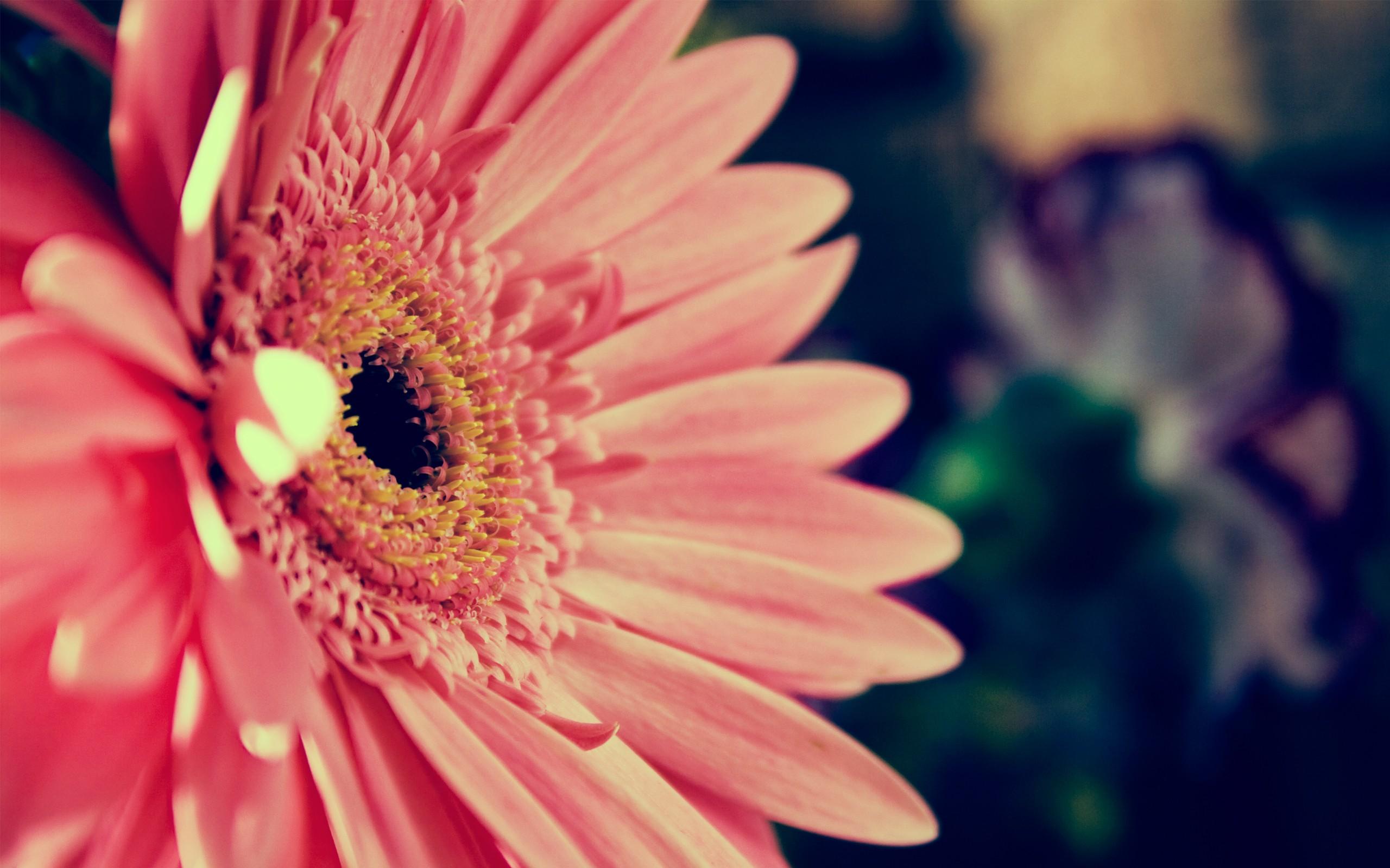 デスクトップ壁紙 ピンクの花 フラワーズ 自然 写真 黄 工場