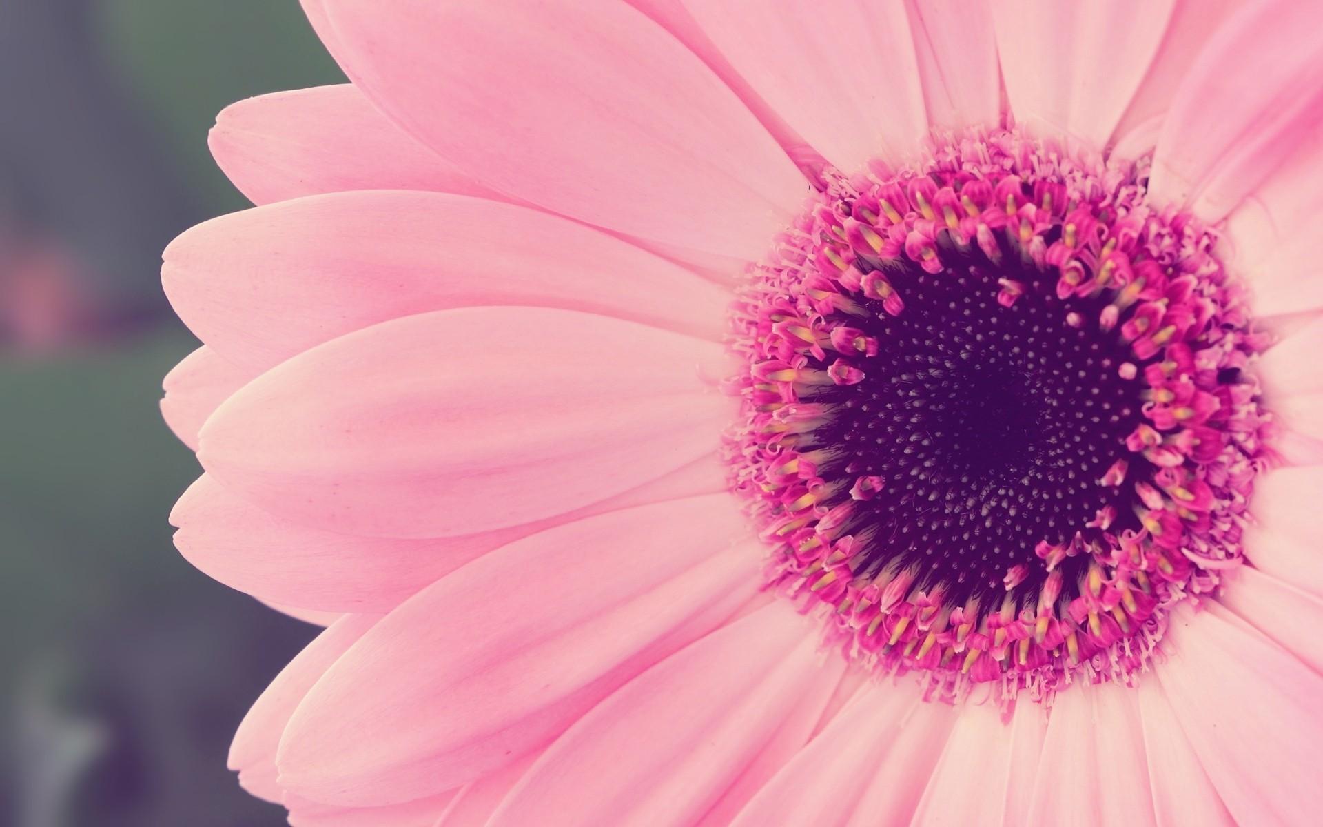 игрушки картинки рабочий стол цветочки розовым фотопечать