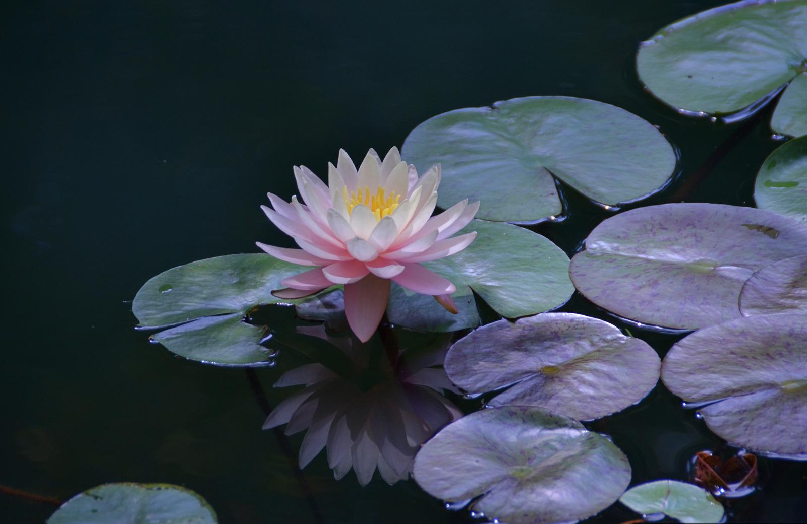 прическу цветы под водой фото сейчас