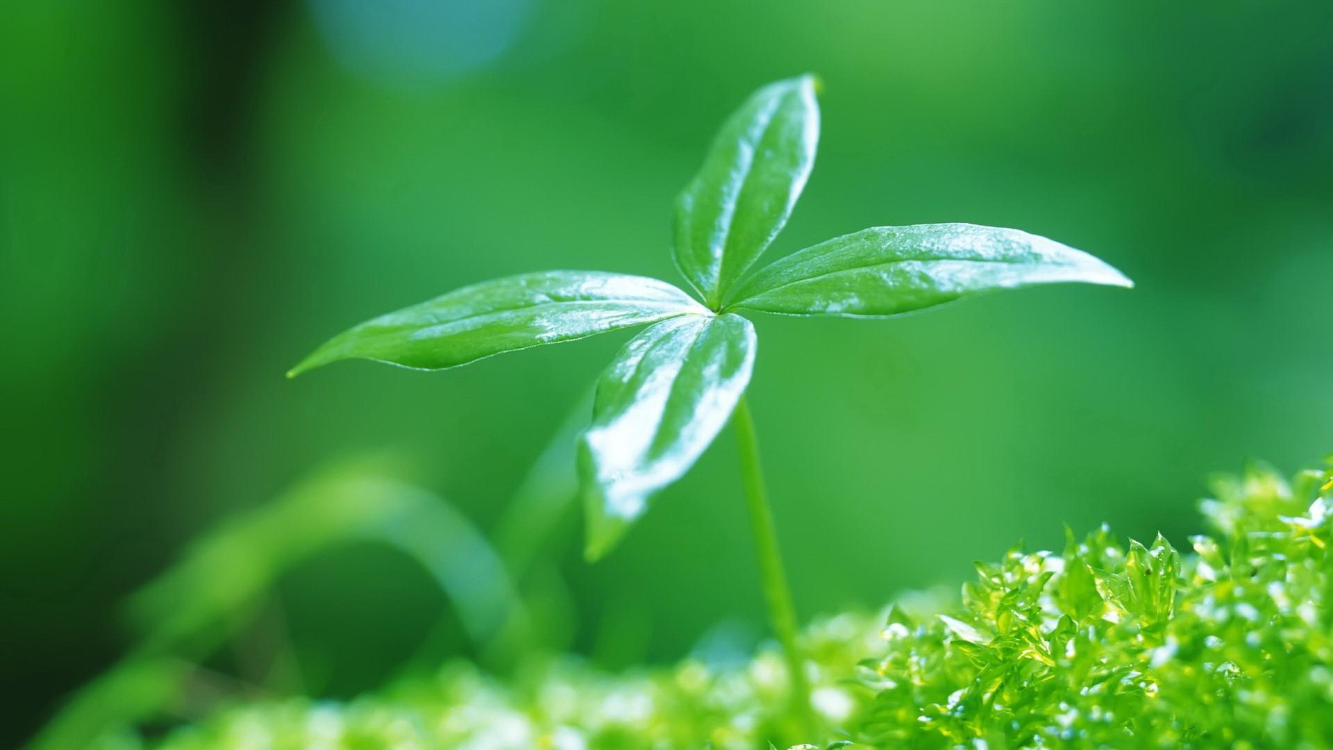 картинки воздух для растений отзывы