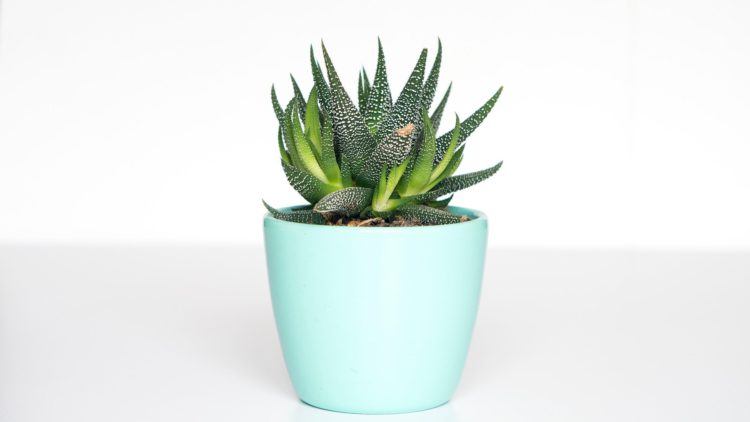 fond d 39 cran les plantes la photographie fond blanc. Black Bedroom Furniture Sets. Home Design Ideas