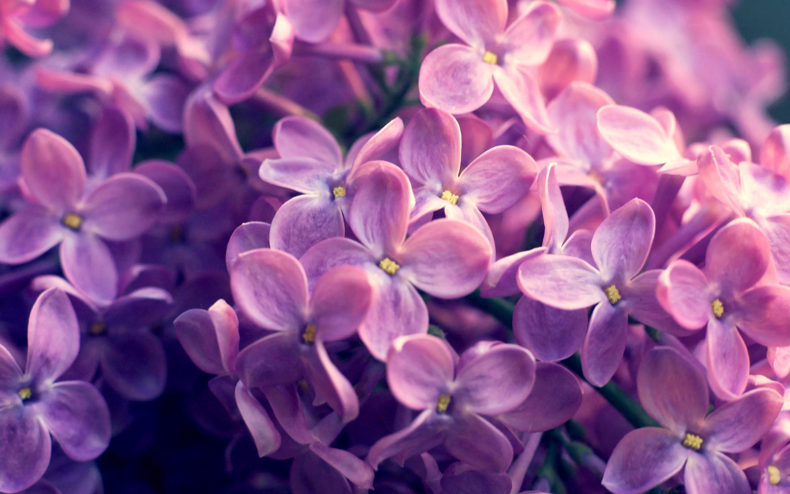 Цветы 1590 400