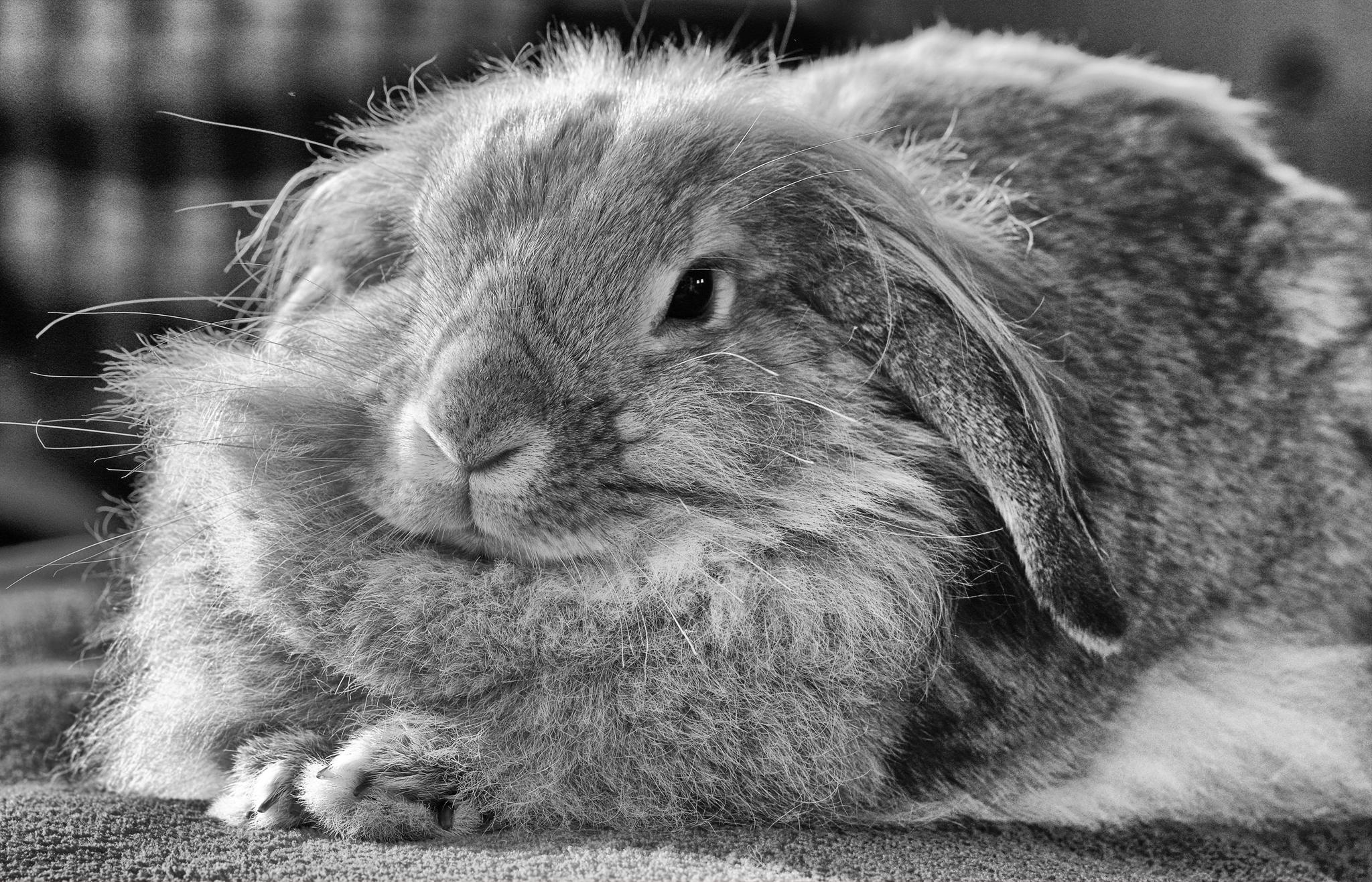 картинка лохматый заяц его родителя
