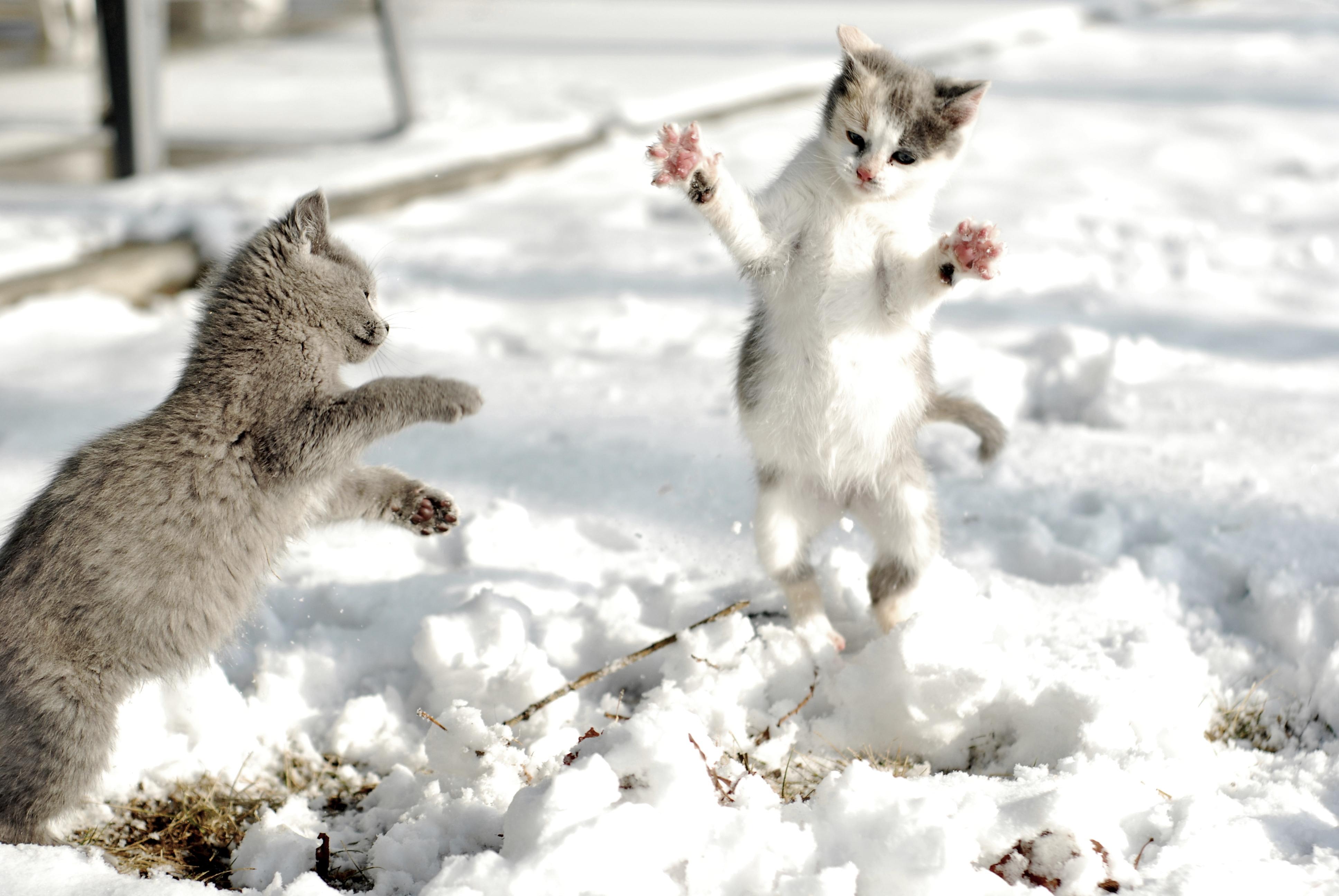 картинки весна животные на снегу безусловно, стоит сваливать