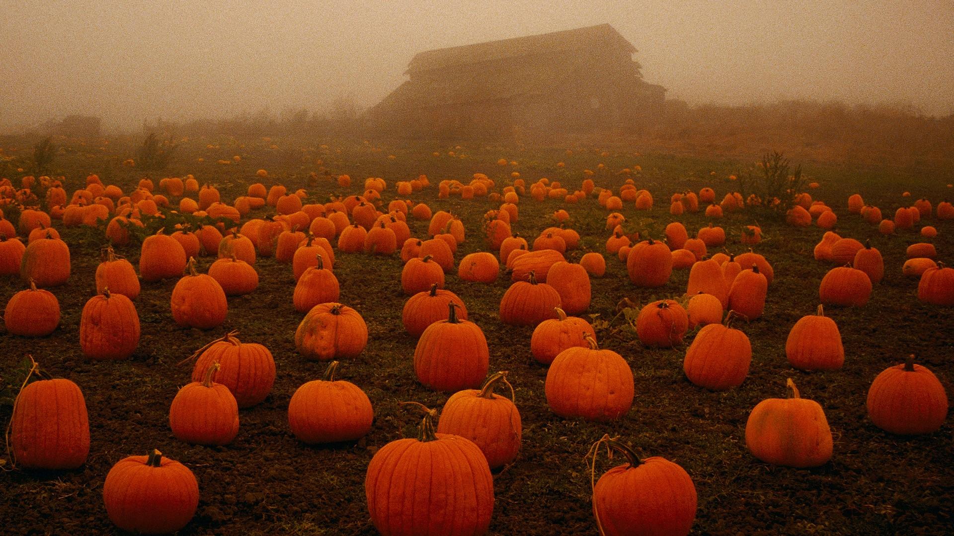 Wallpaper Pumpkin Field Fall Plants Spooky 1920x1080 Phlex0 1666529 Hd Wallpapers Wallhere