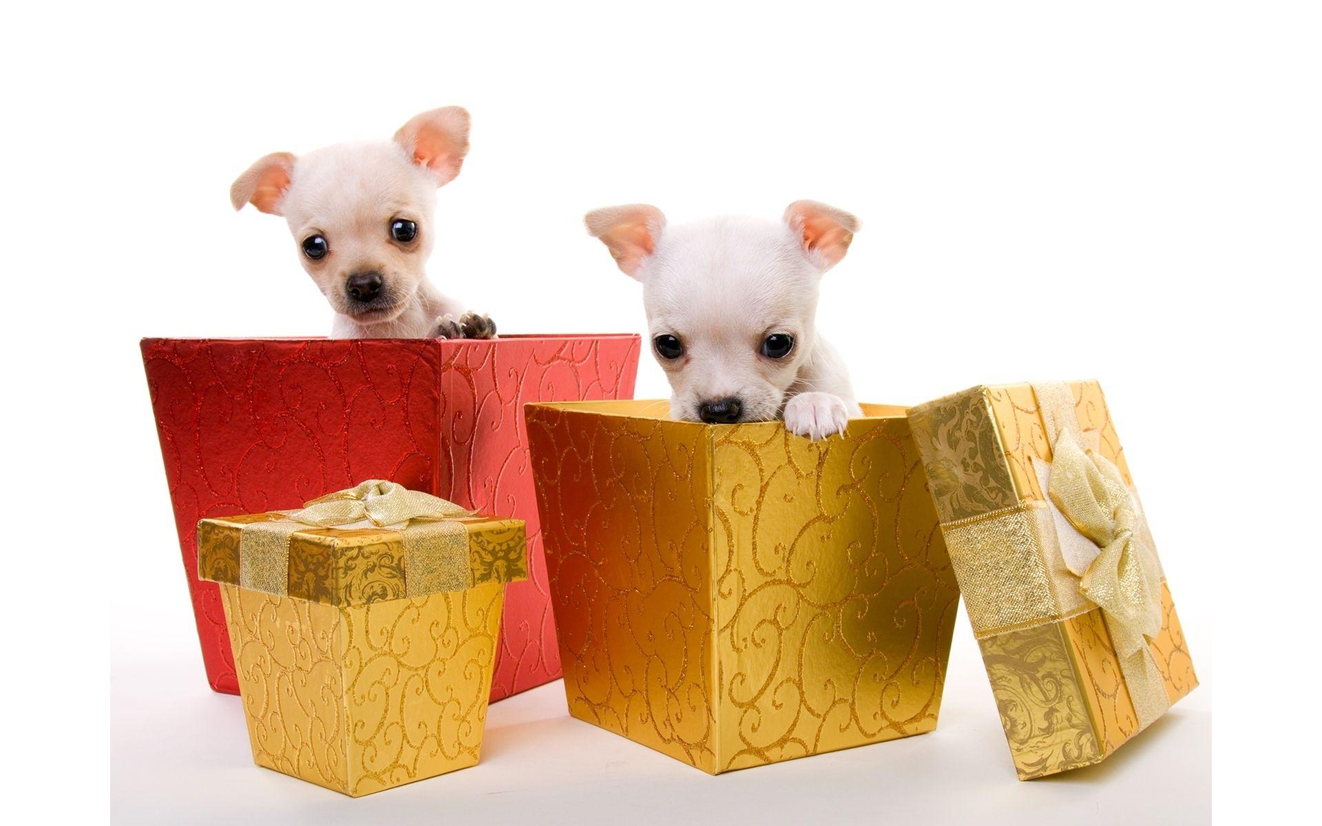 В подарок животное 15