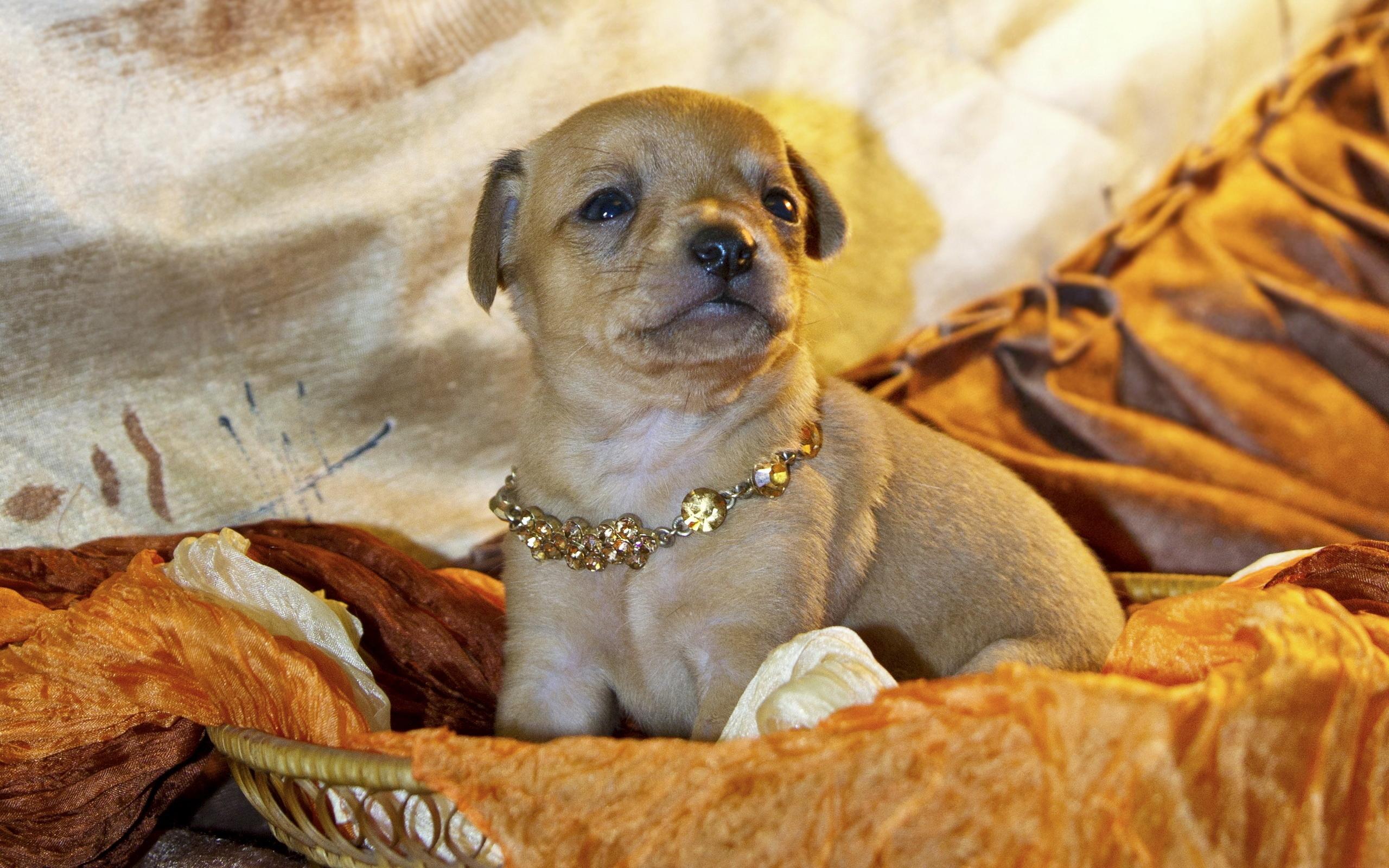 картинки собак с украшениями материал один лучших