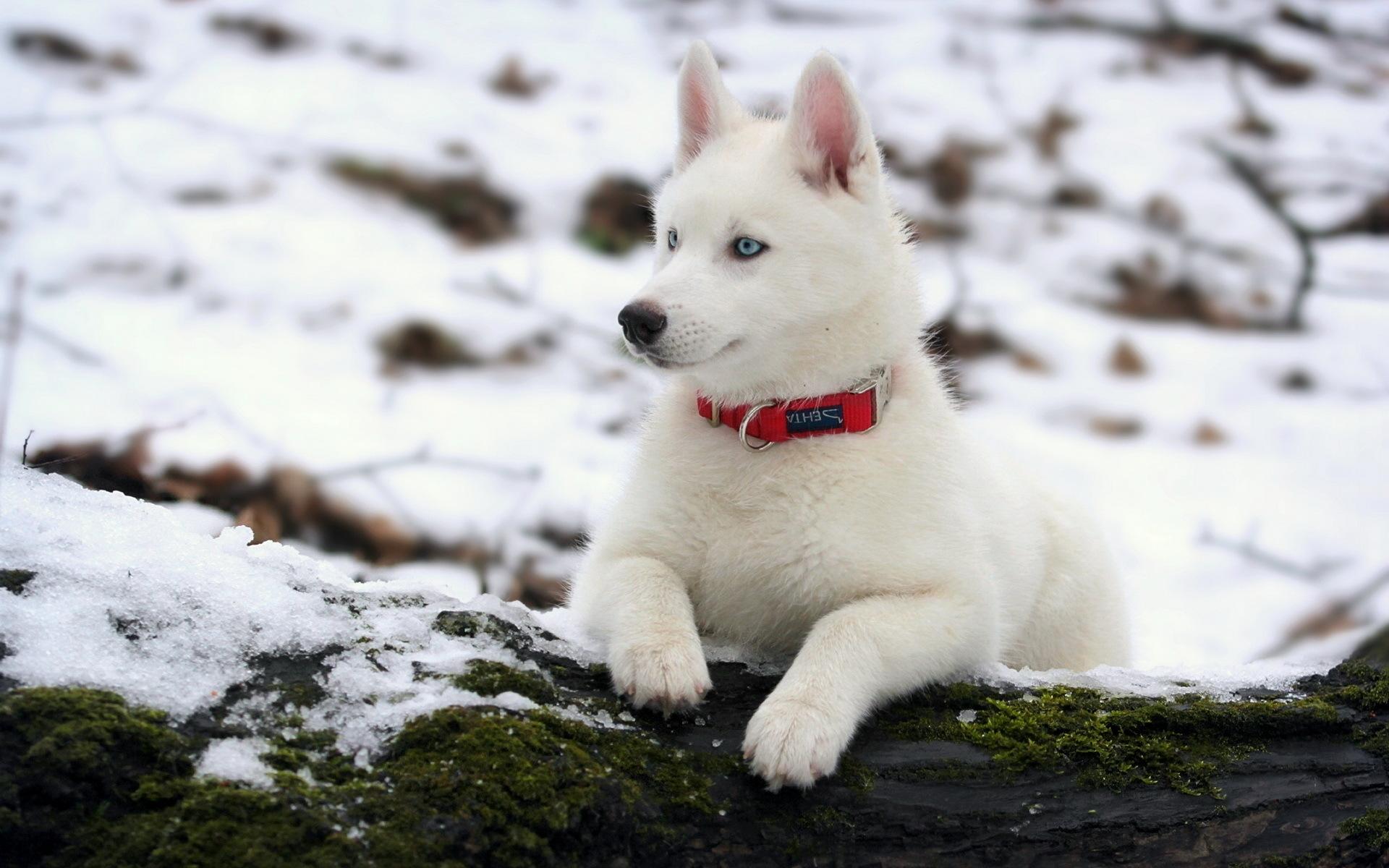 самые красивые собаки картинки на обои из-за того, что