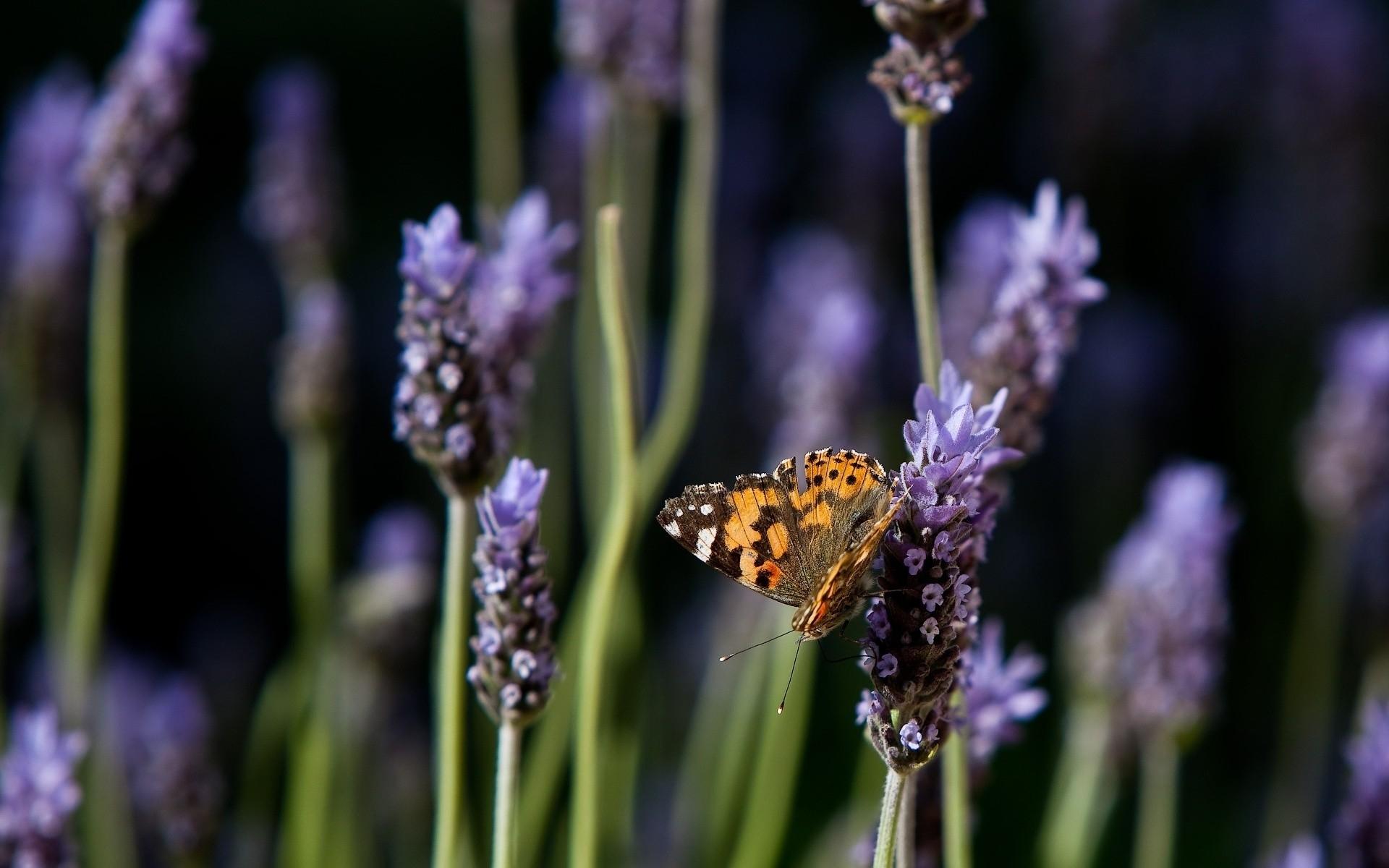 Wallpaper Purple Insect Orange Pollen Spring Flower Flora