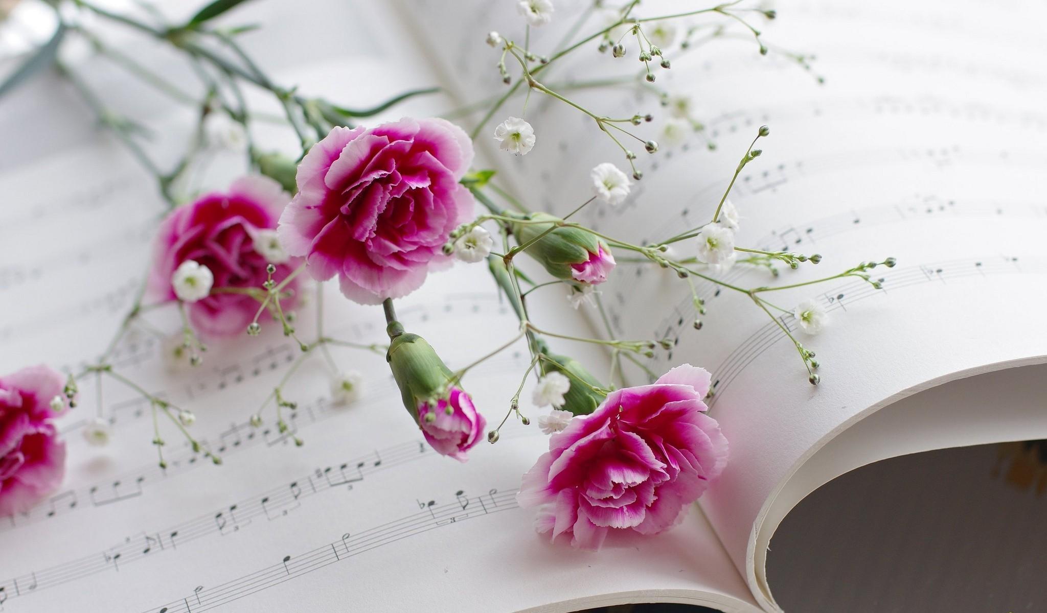 Amazing Wallpaper Music Spring - purple-music-blossom-pink-spring-flower-plant-flora-petal-land-plant-flowering-plant-floristry-flower-bouquet-flower-arranging-floral-design-carnations-sheet-music-gypsophila-642024  Photograph_795245.jpg