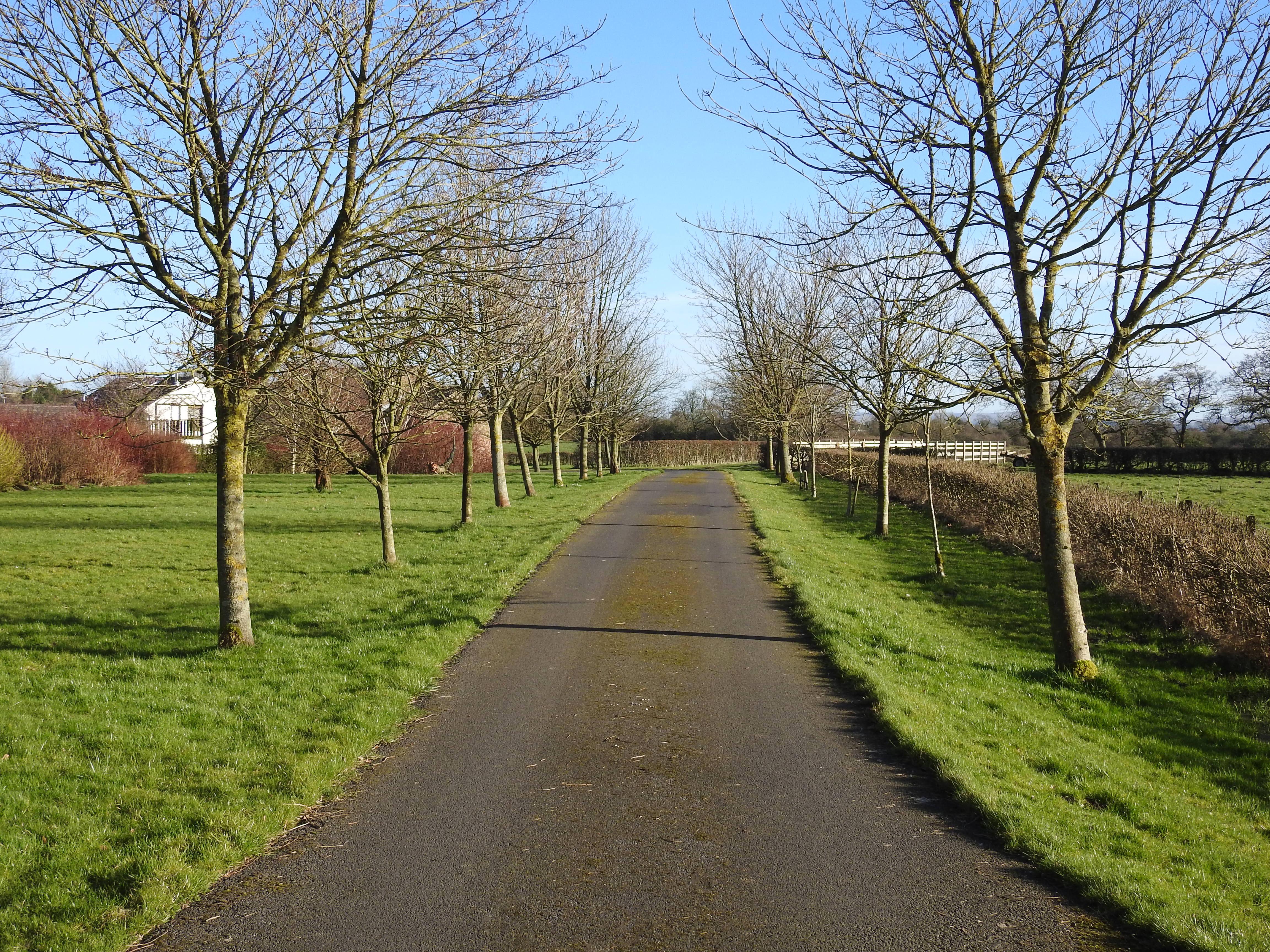 Hintergrundbilder Zitat Frühling Fahrbahn Spur Bäume
