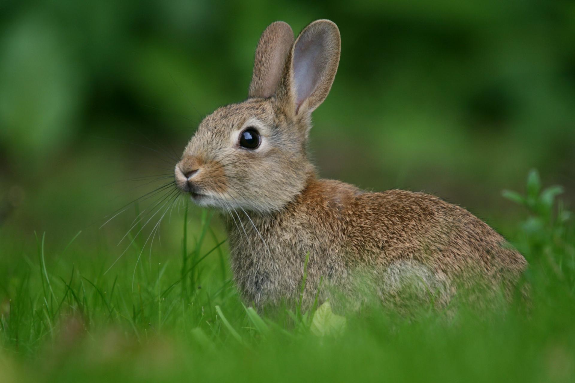 Картинки с зайц