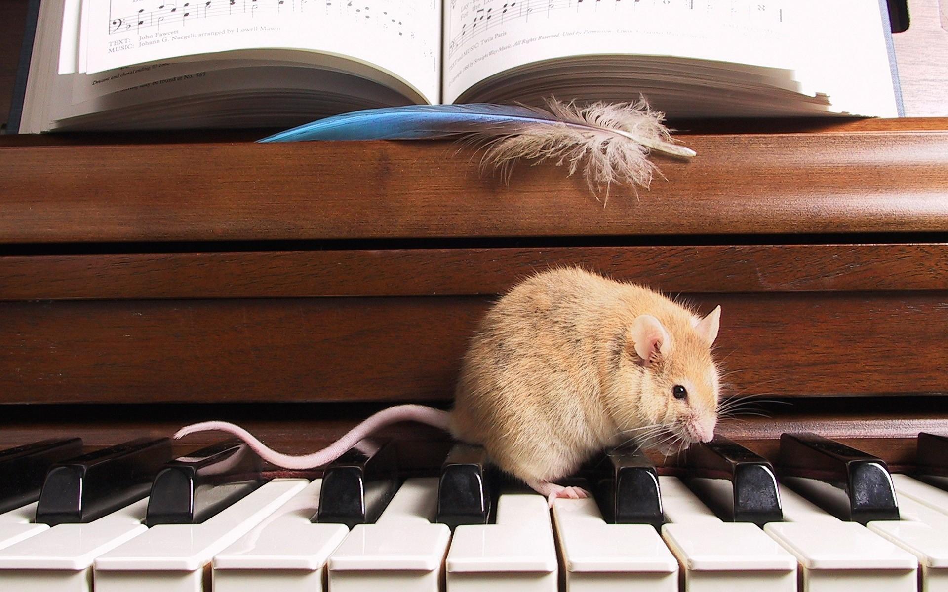 Красивые картинки музыки милые