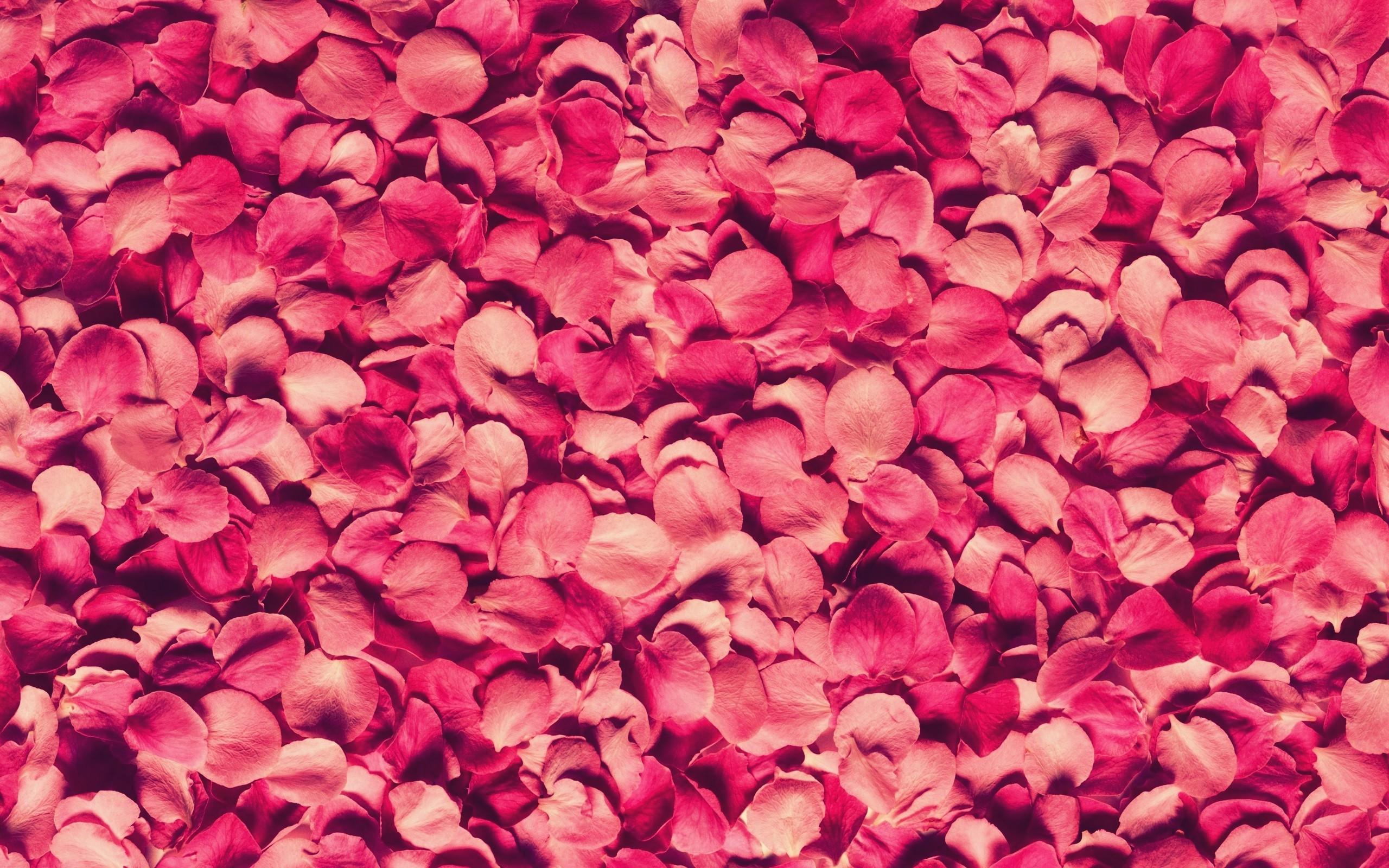 Fondos De Pantalla Rosa: Fondos De Pantalla : Rojo, Pétalos, Rosa, Textura, Rosado