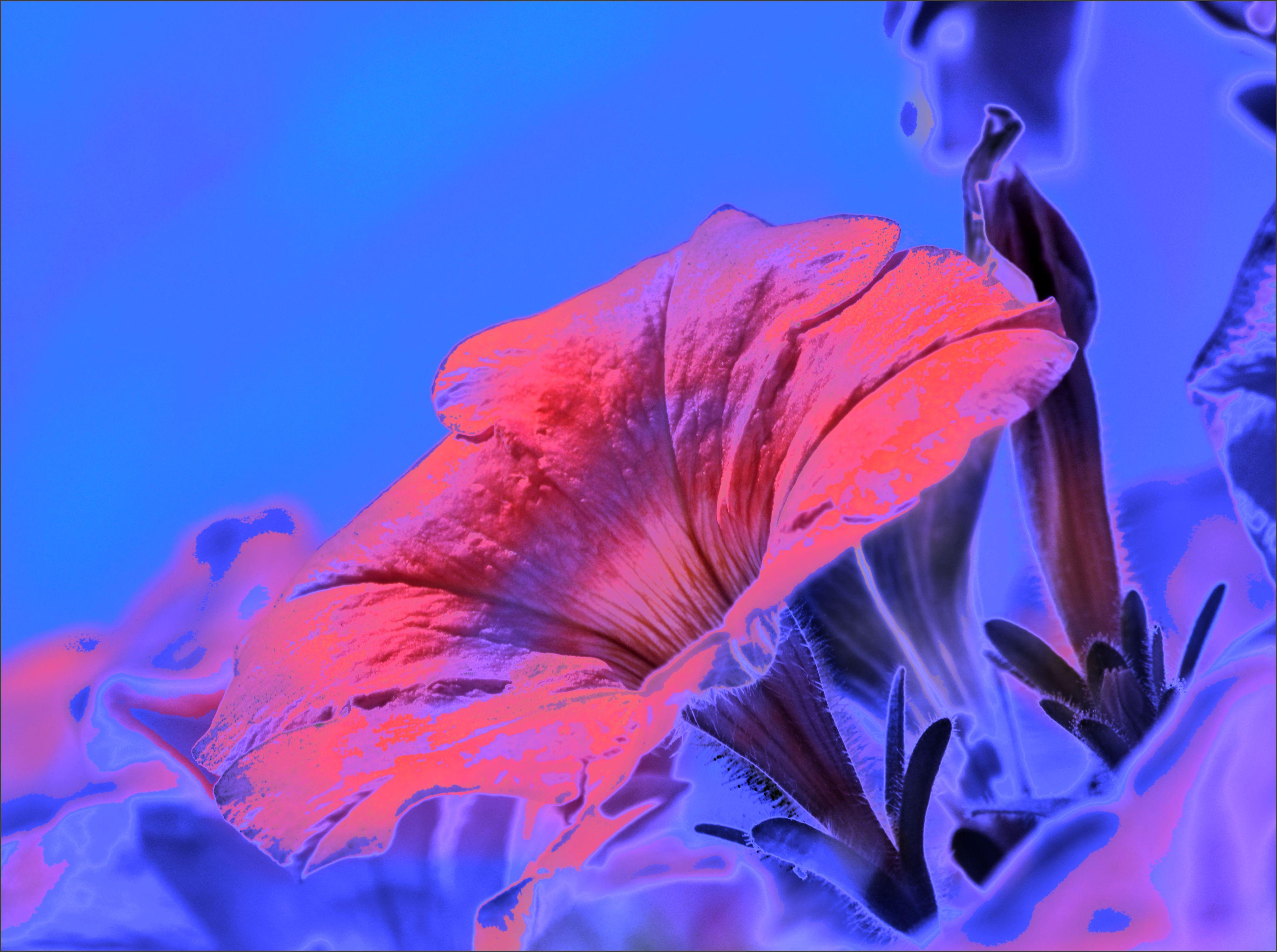 Paling Keren 10+ Wallpaper Warna Pink Tua - Richa Wallpaper