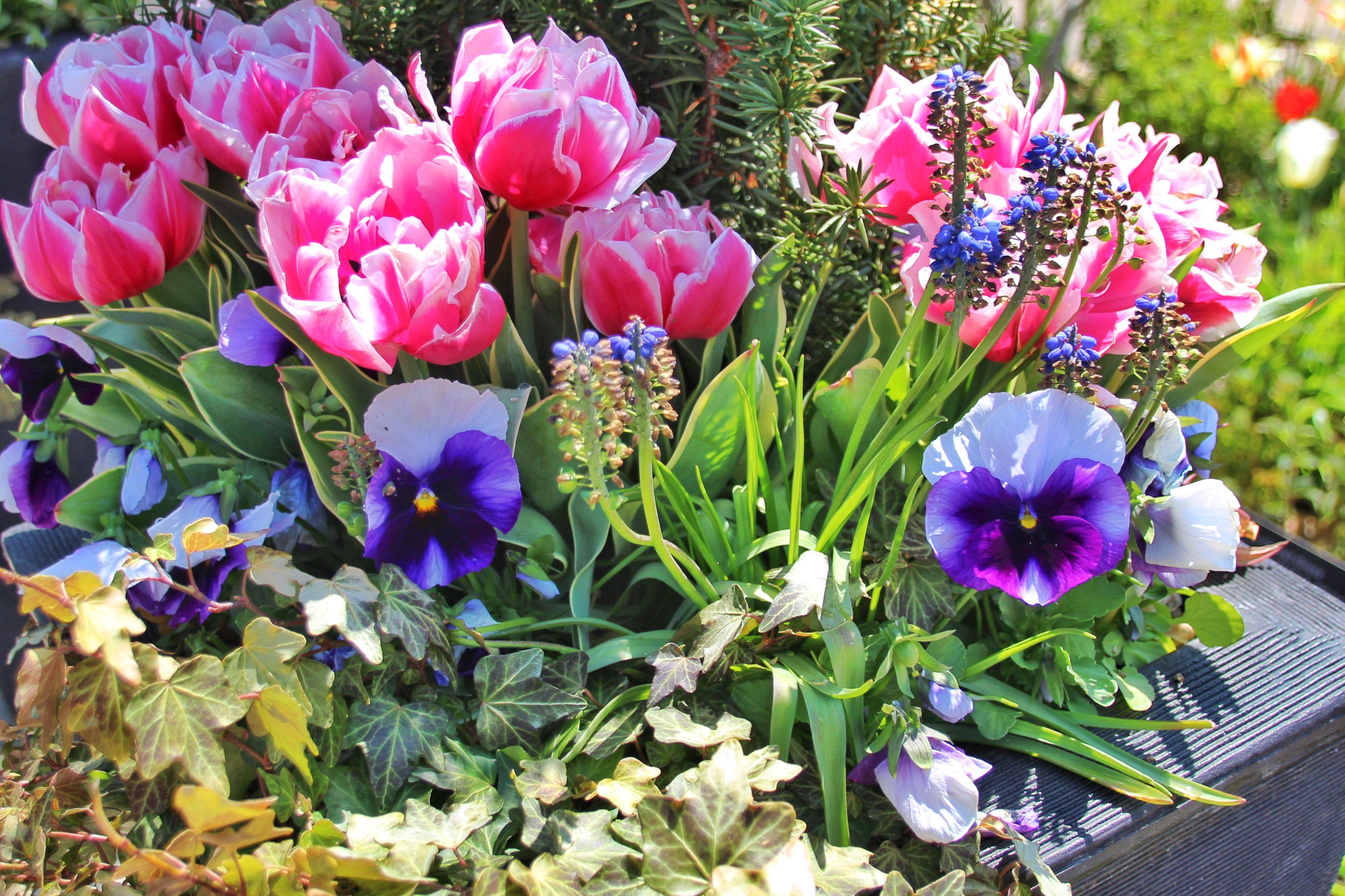 Download 8700 Koleksi Background Hitam Tulip HD Terbaru