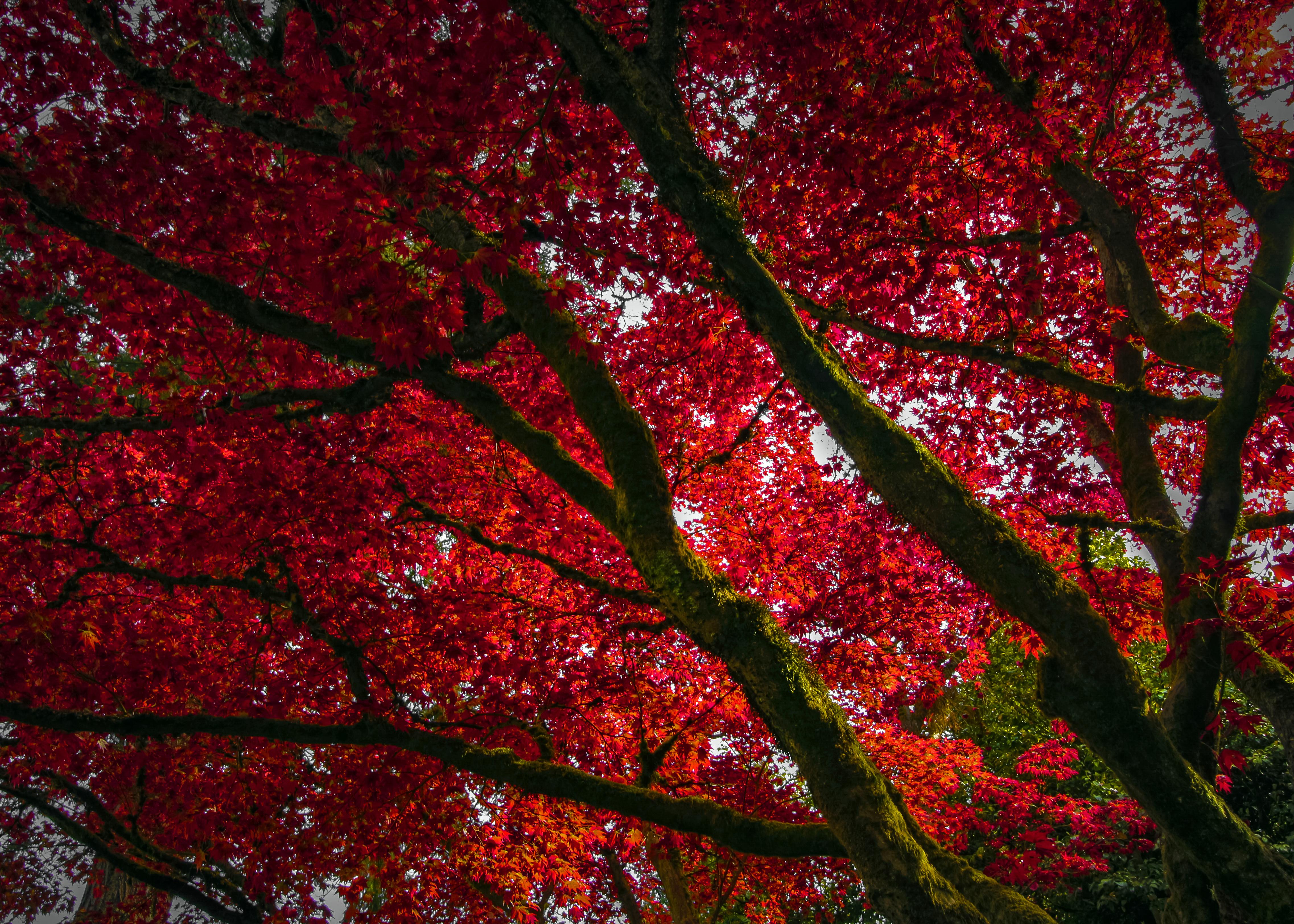 fond d'écran : arbre, oregon, portland, nord-ouest pacifique