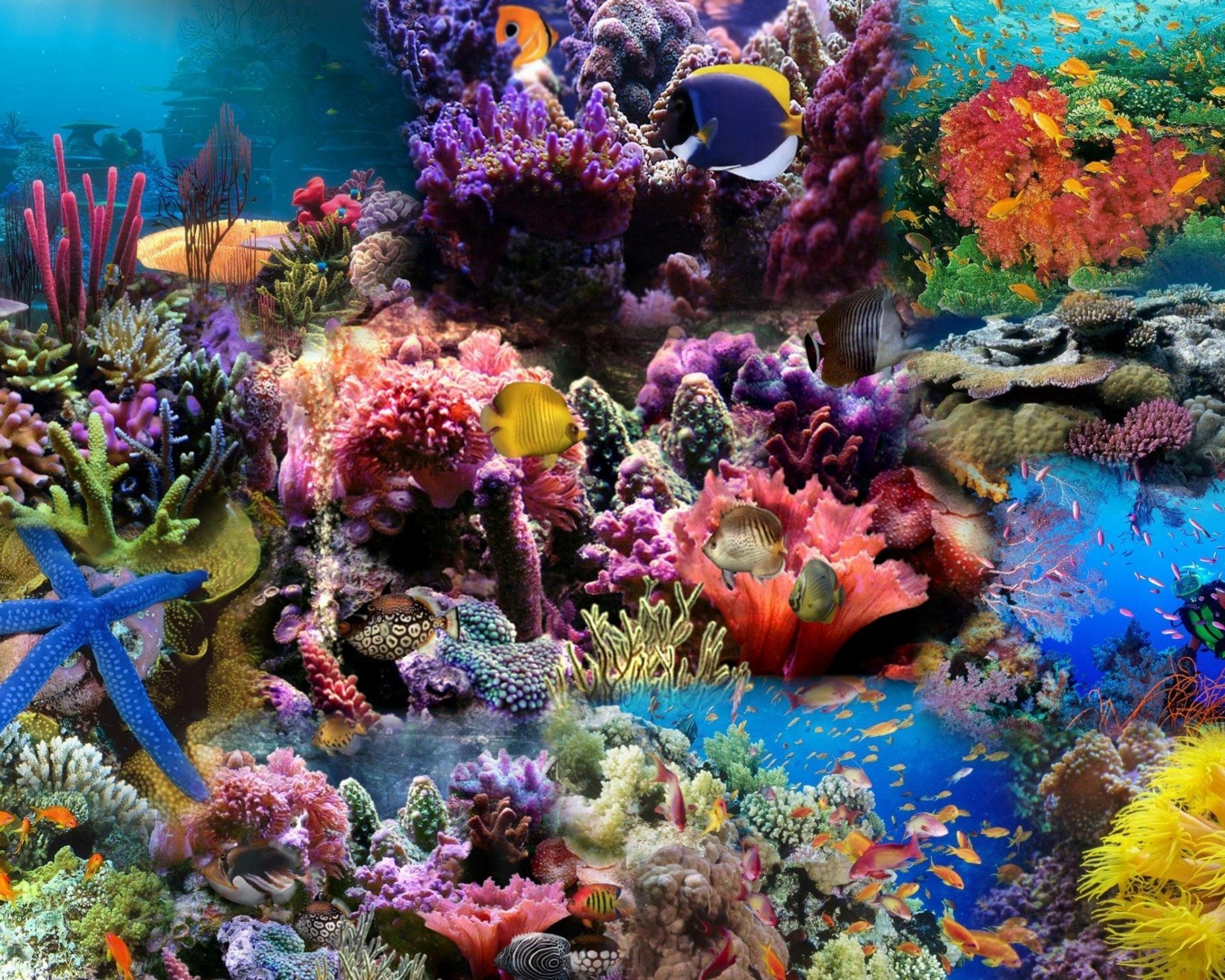 способны подводная природа картинки составляющая престиж