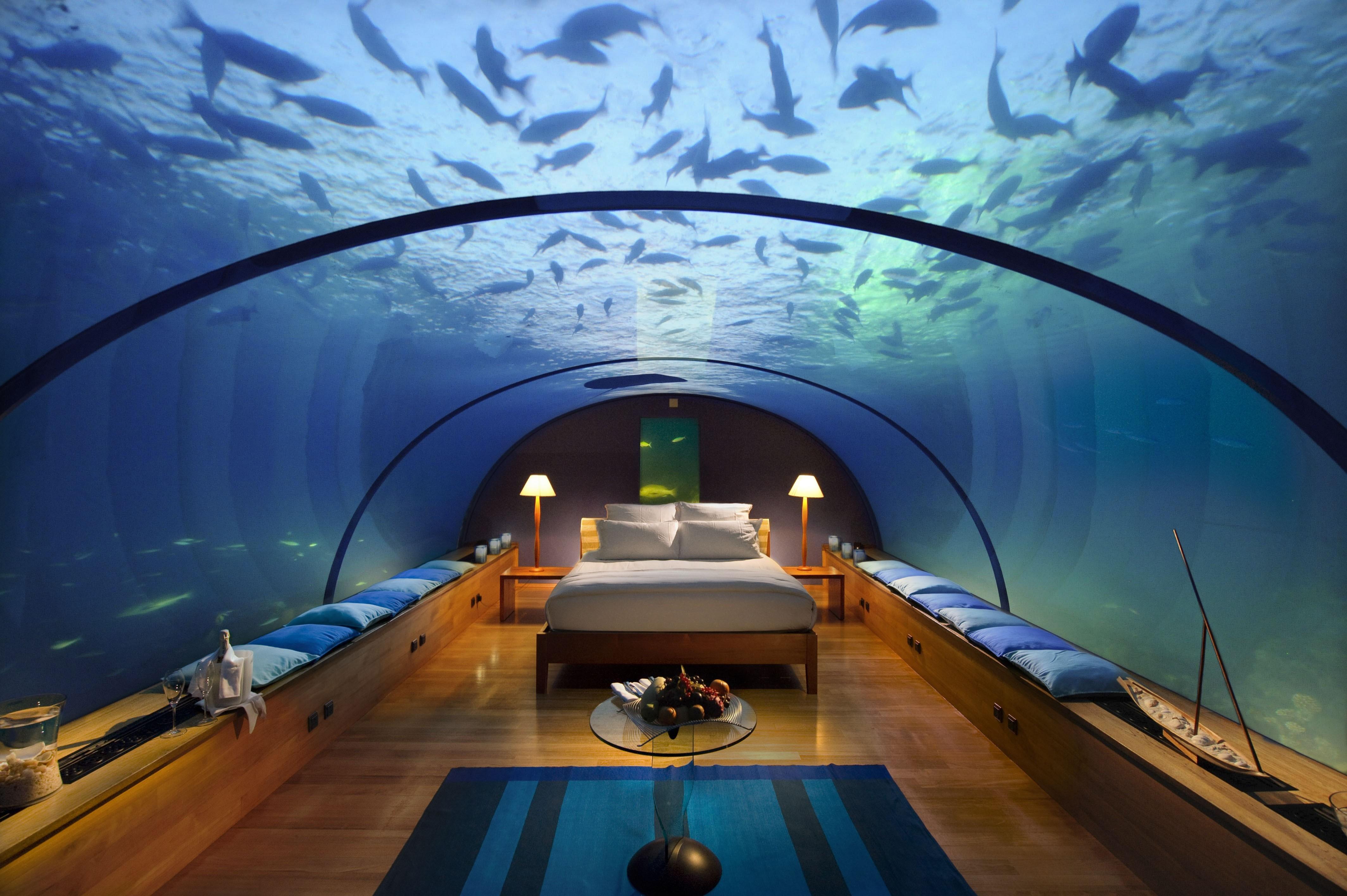 Hintergrundbilder : Betrachtung, Fisch, Unterwasser, Schlafzimmer ...