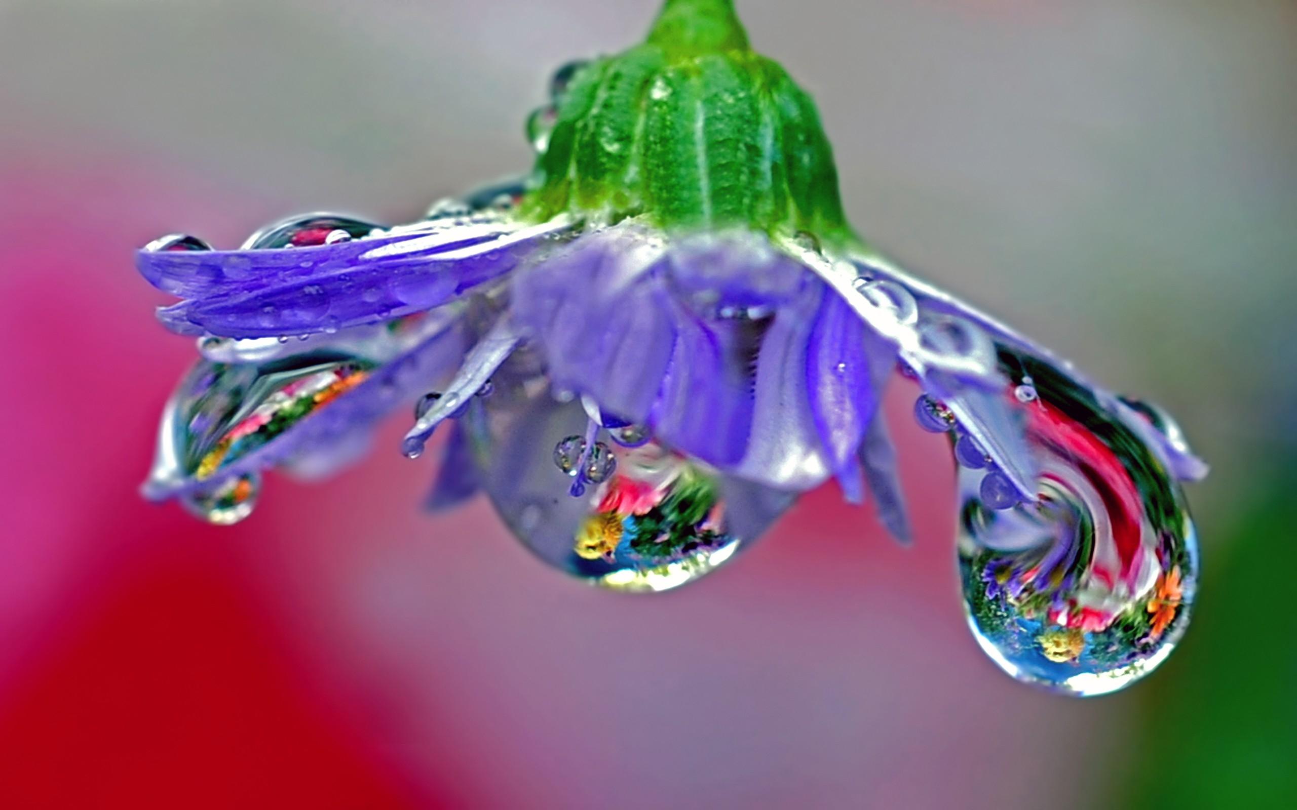 красивые картинки капелек росы подборку