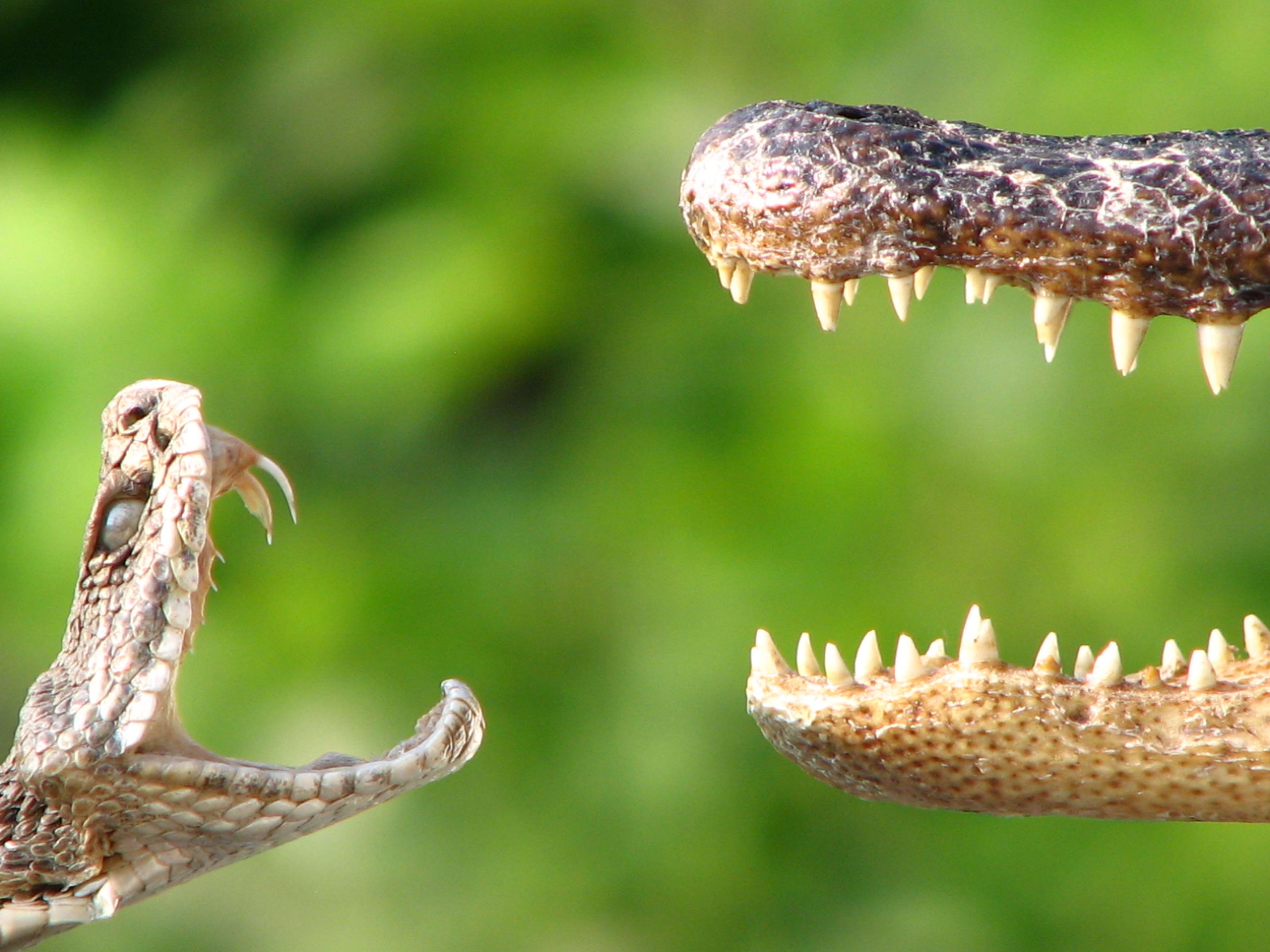 соленого теста картинки змея с клыками выкладывает там