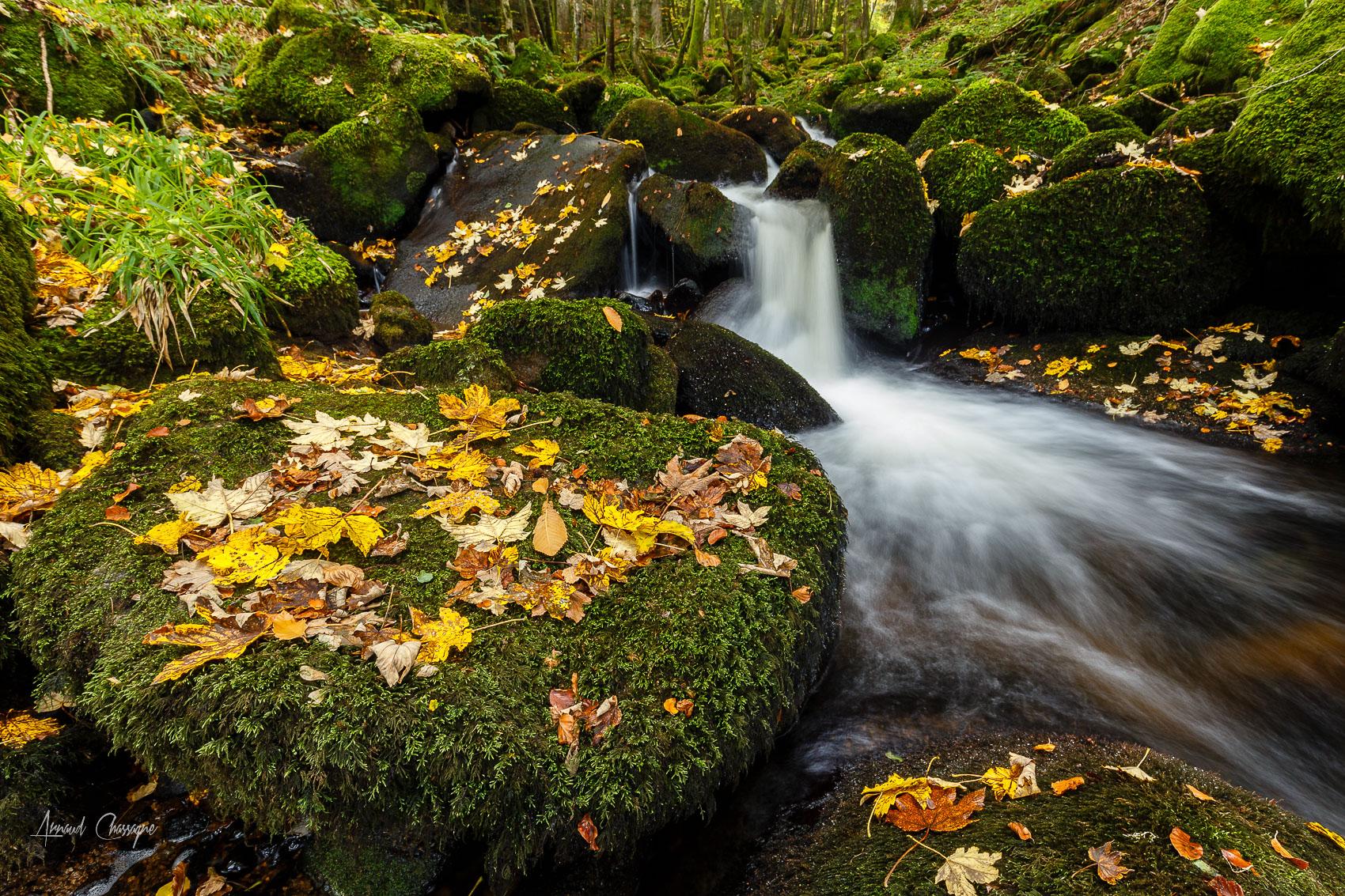 foto de Fond d'écran : rivière, darots, Auvergne, tomber, feuilles, l ...