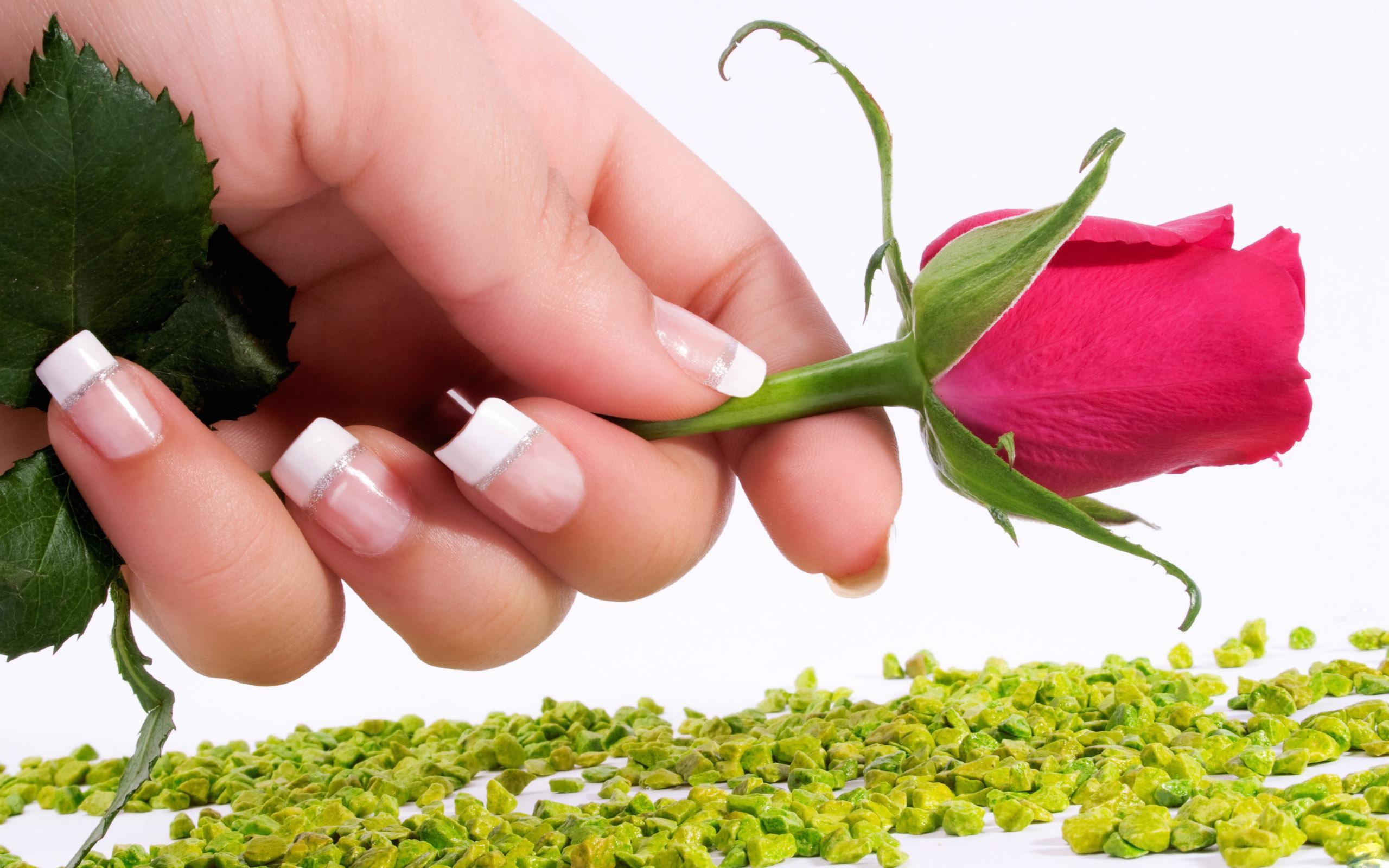 Fond D Ecran Rose Fleur Main Manucures Des Pierres 2560x1600