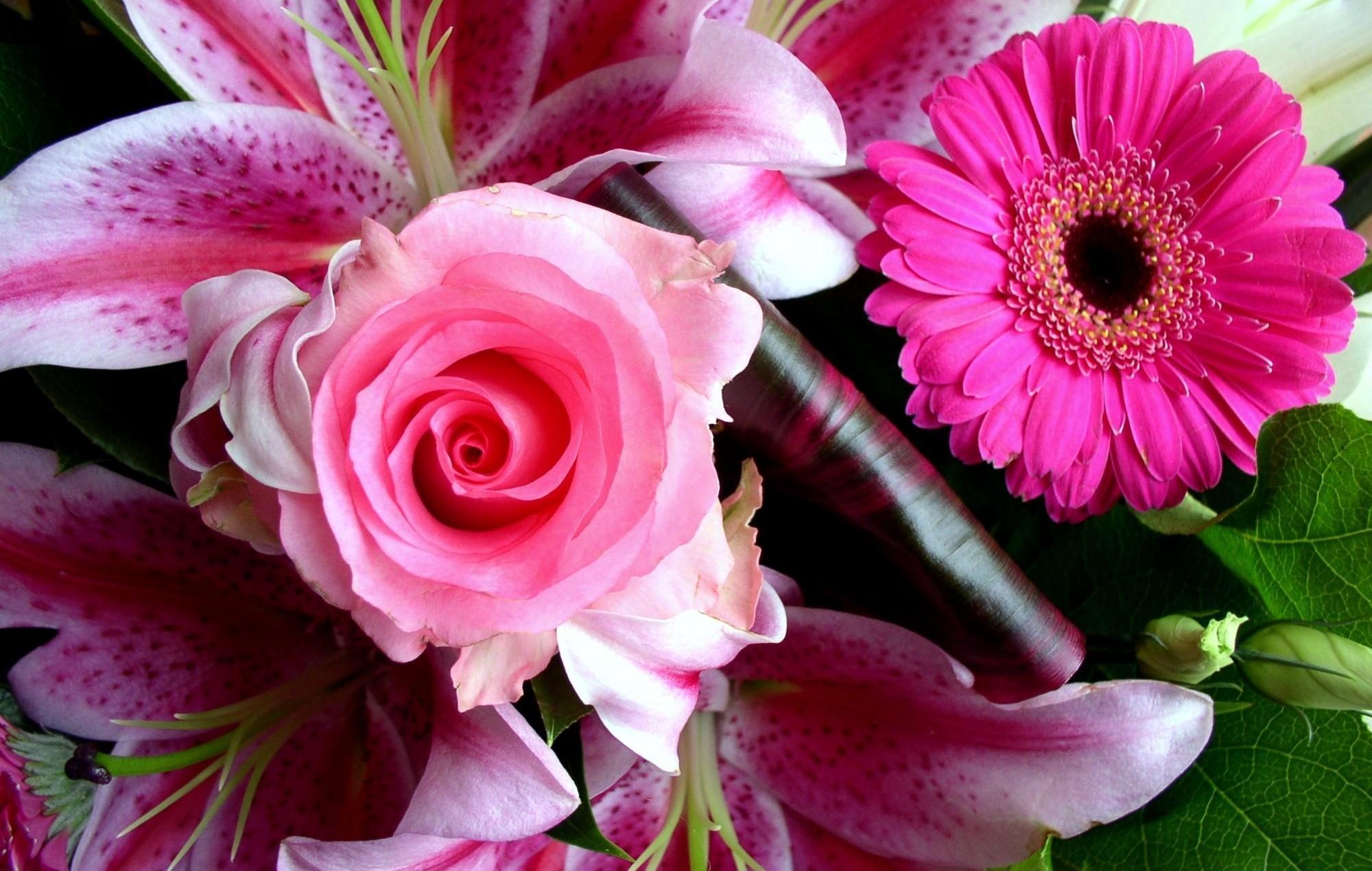 самые хорошие картинки цветов интересно
