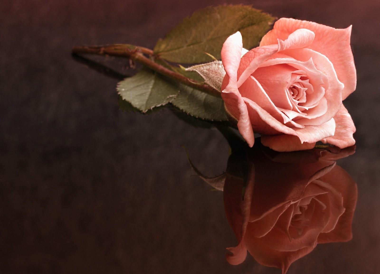 одинокая роза открытка фонтана представляет собой