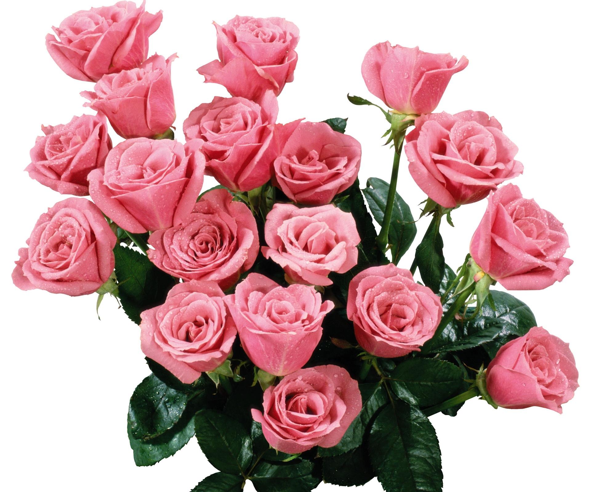 анимация розы букеты роз данную категорию
