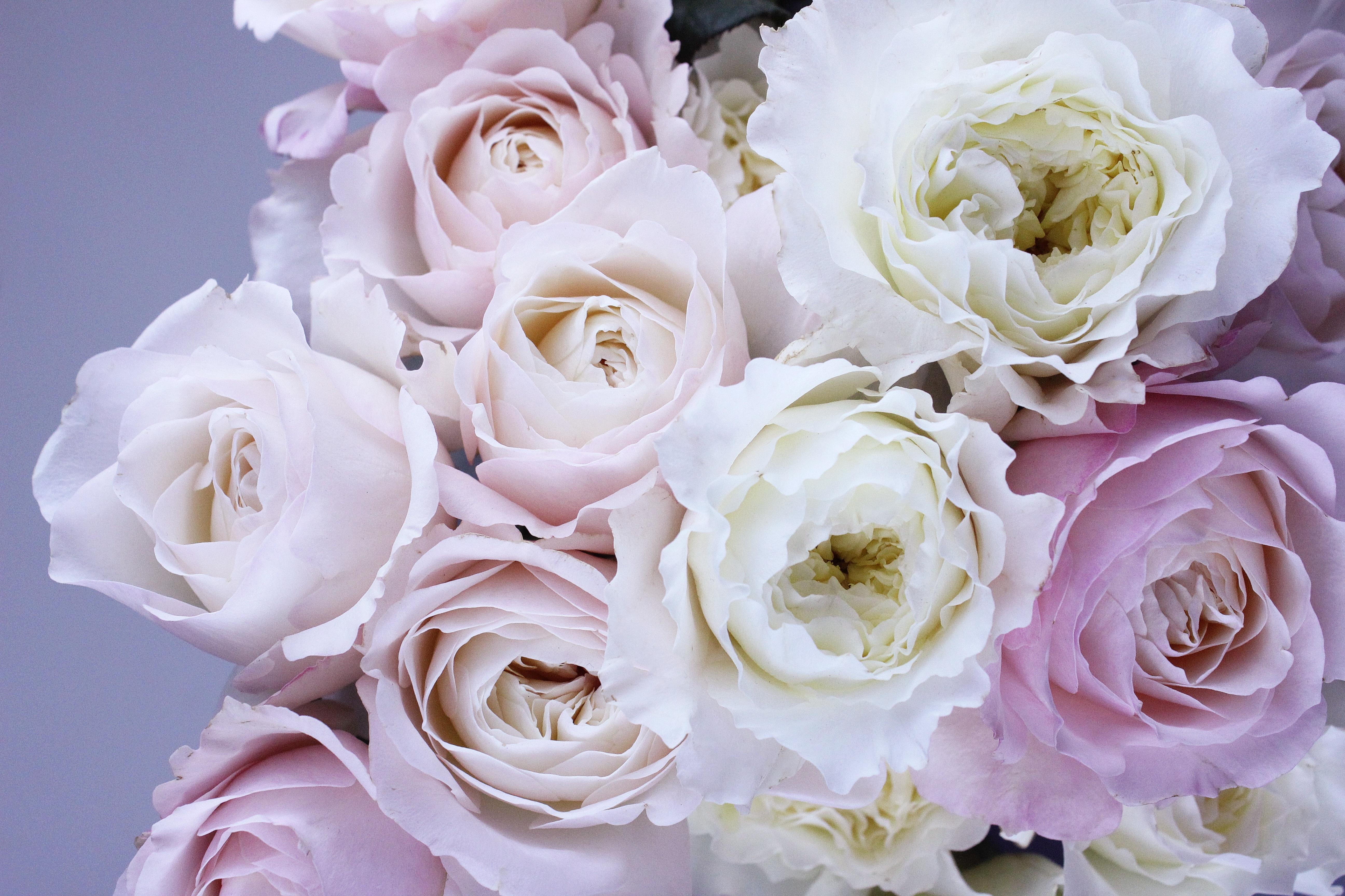 Fondos De Pantalla Rosa Rosado Flor Sensibilidad
