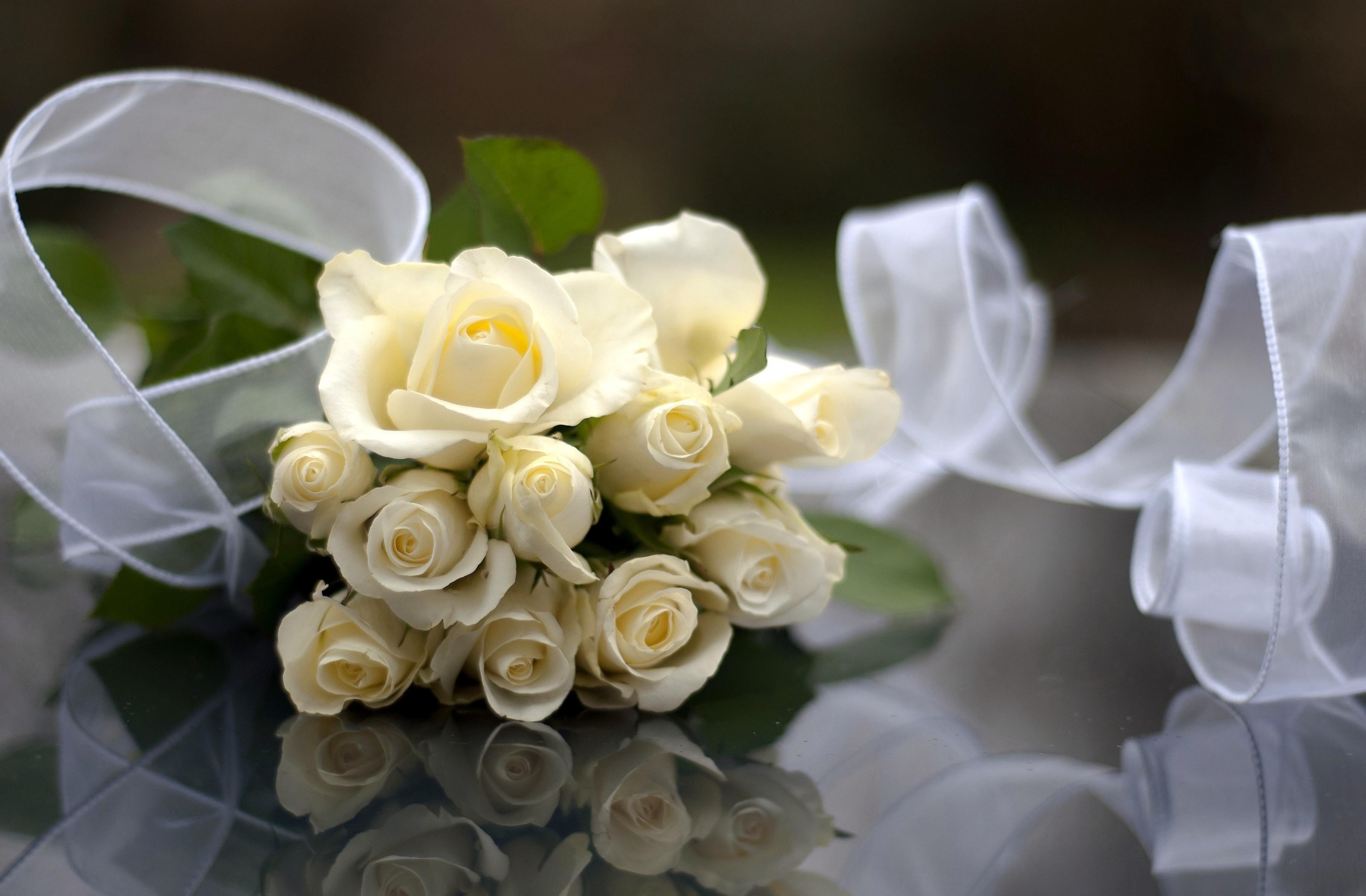 wallpaper rose white flowers bouquet ribbon reflection