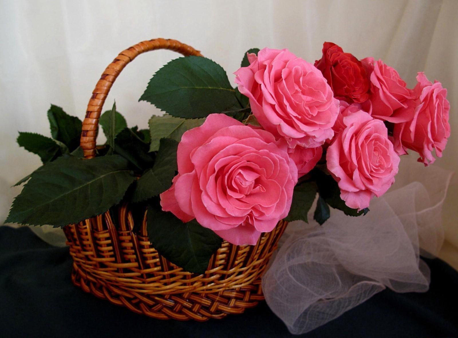 просто так розы открытка