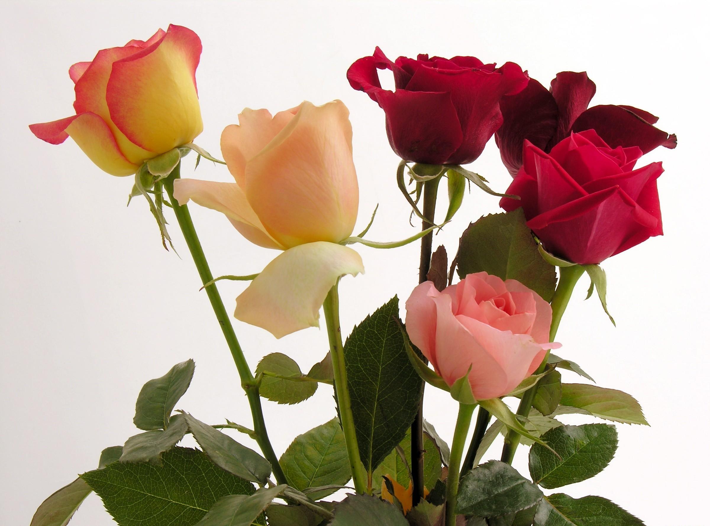 Картинки красивые розы другие цветы
