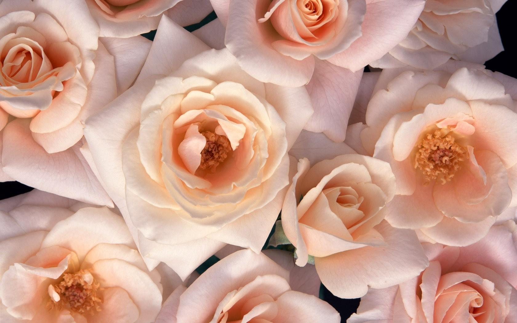 Белые цветы на коричневом фоне