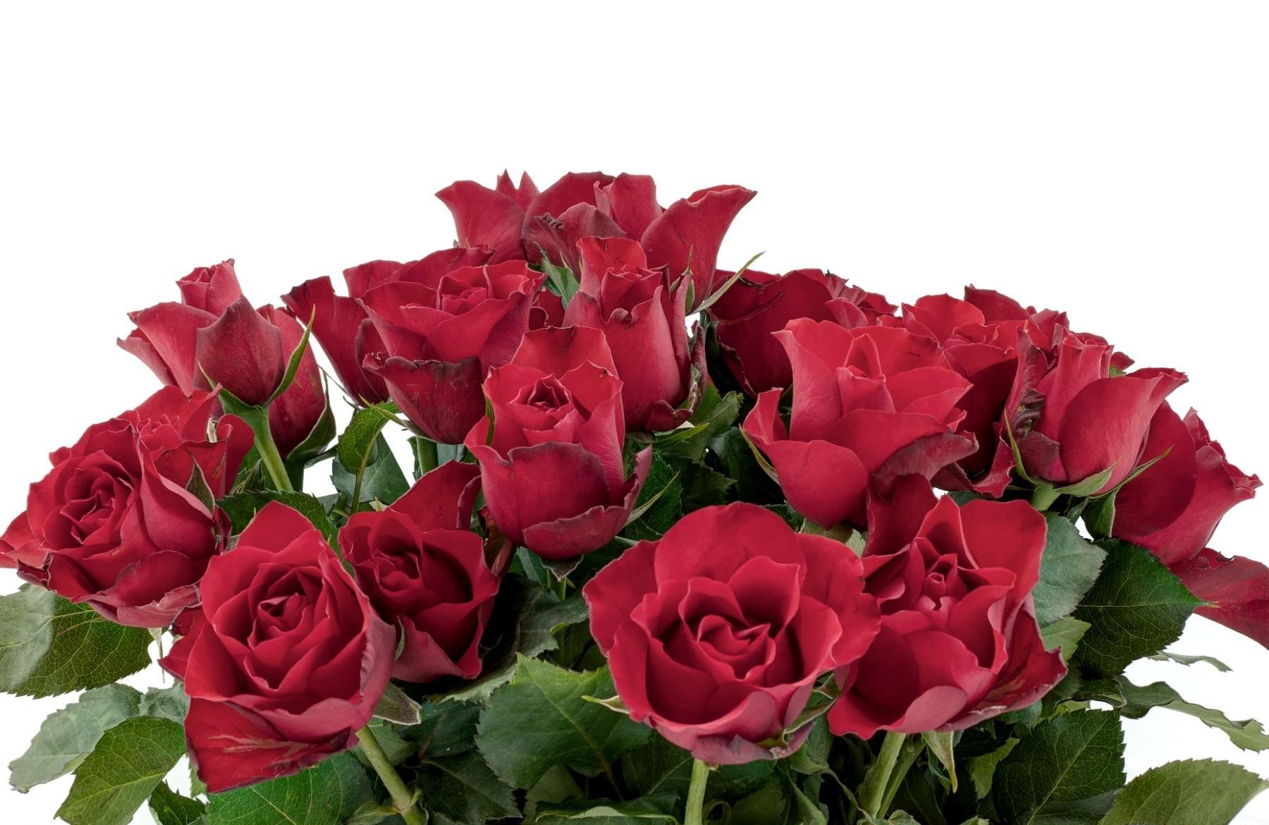 картинка шикарные розы на белом фоне прозрачном