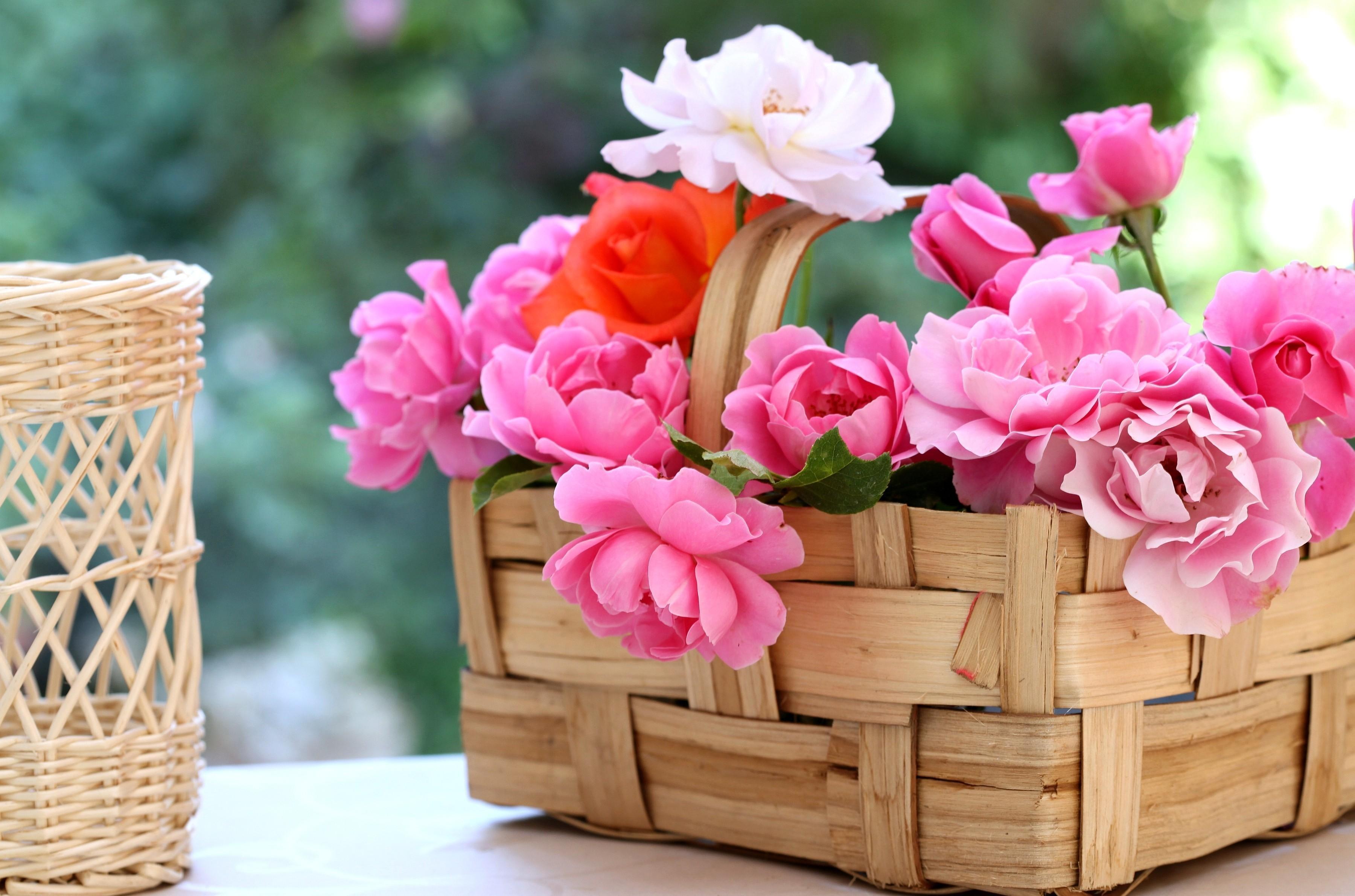 гифы цветы фото макро в корзинках раздевалке, вошел